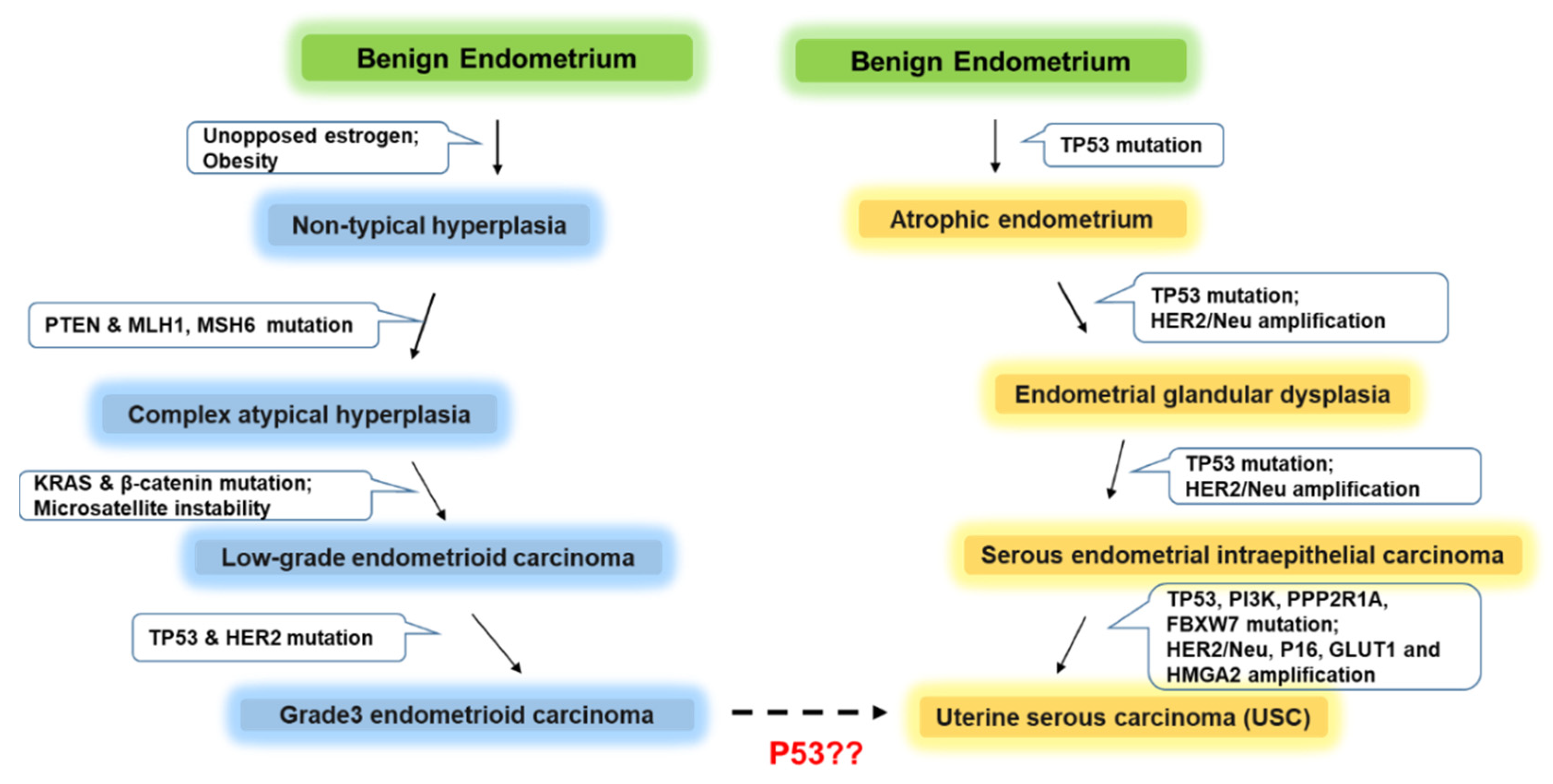 Cancers Free Full Text Pathogenesis And Clinical Management Of Uterine Serous Carcinoma Html