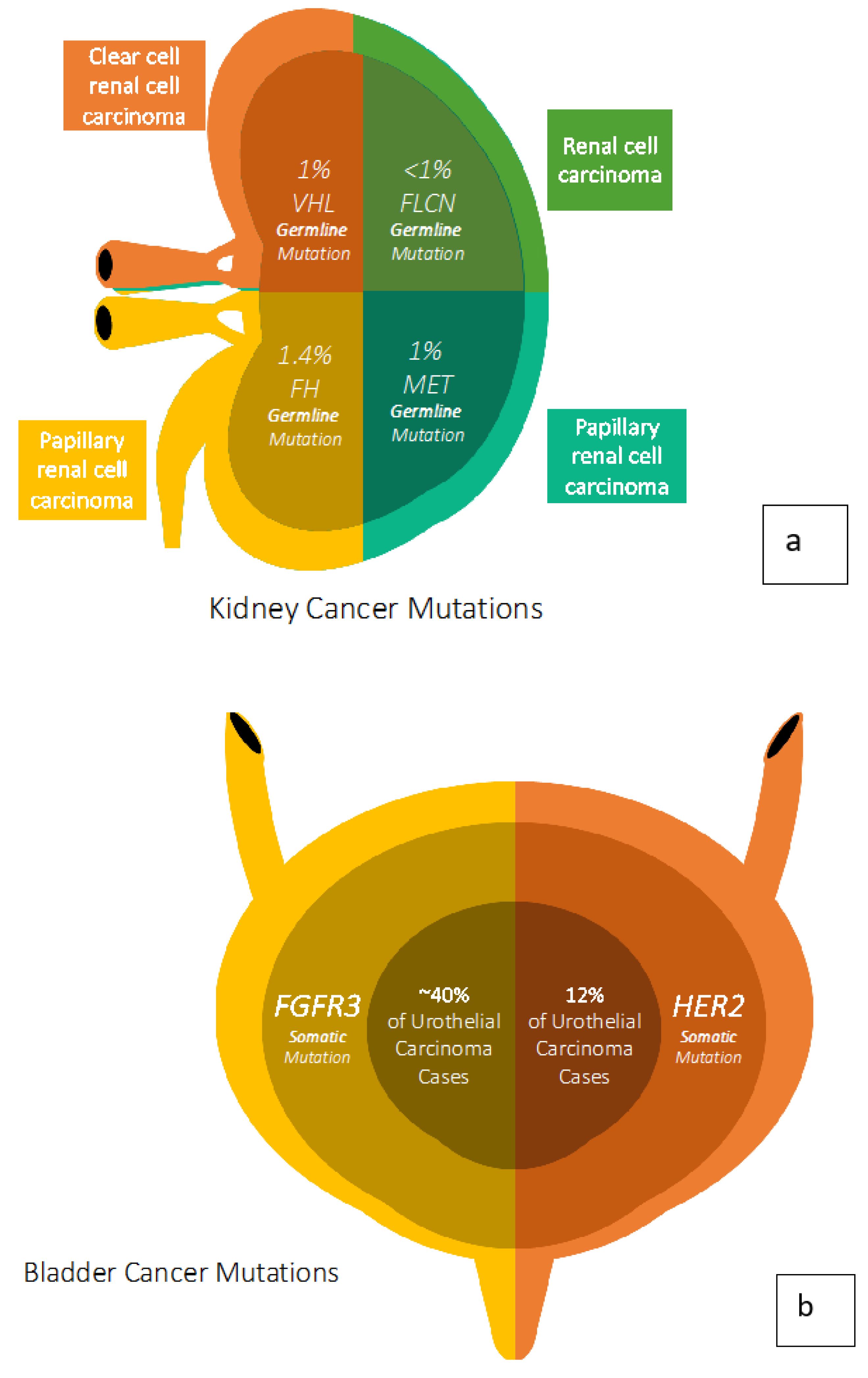 Cancers Free Full Text Cancer Genetics And Therapeutic Opportunities In Urologic Practice Html