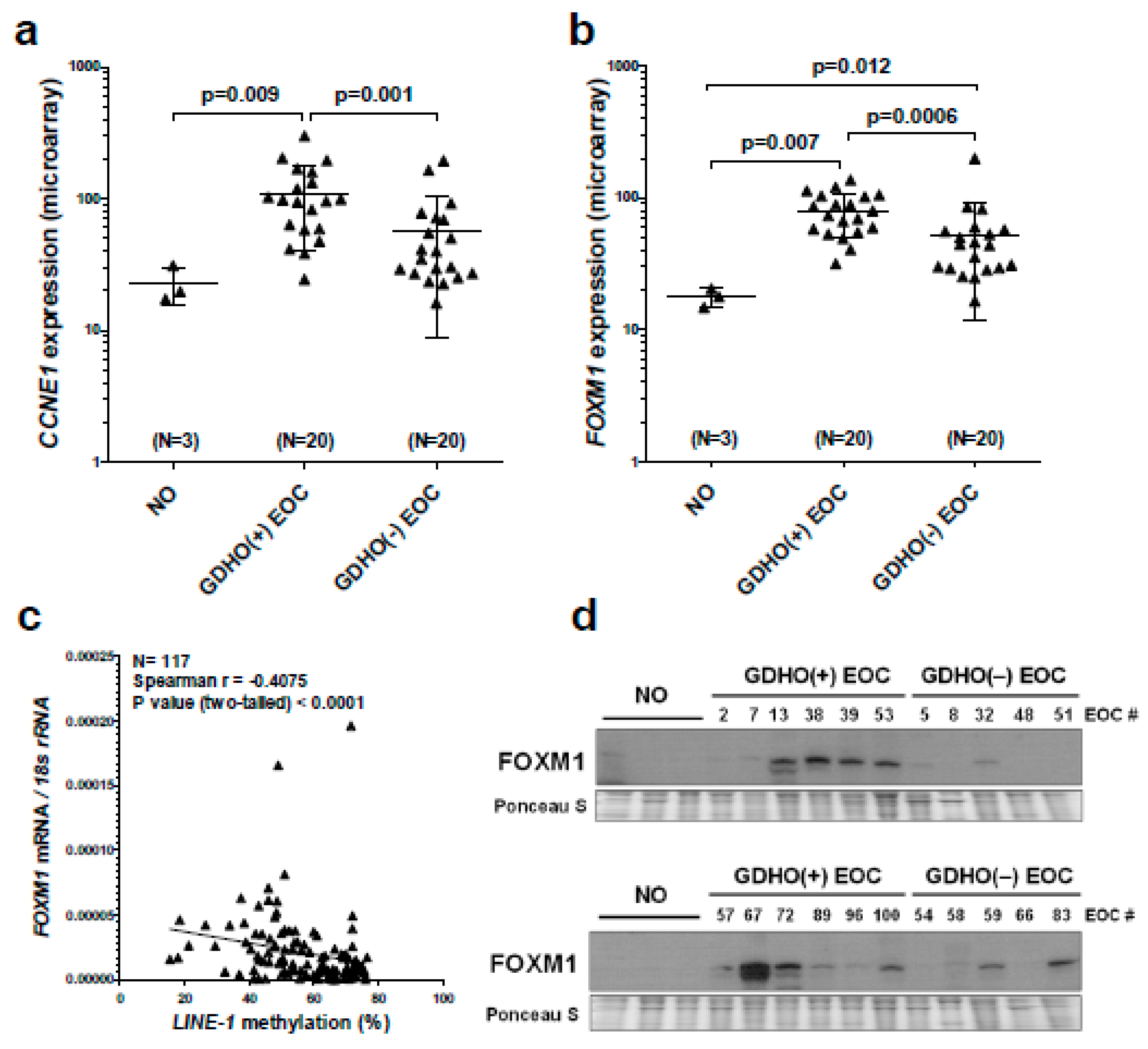 Cancers Free Full Text Global Dna Hypomethylation In Epithelial Ovarian Cancer Passive Demethylation And Association With Genomic Instability Html