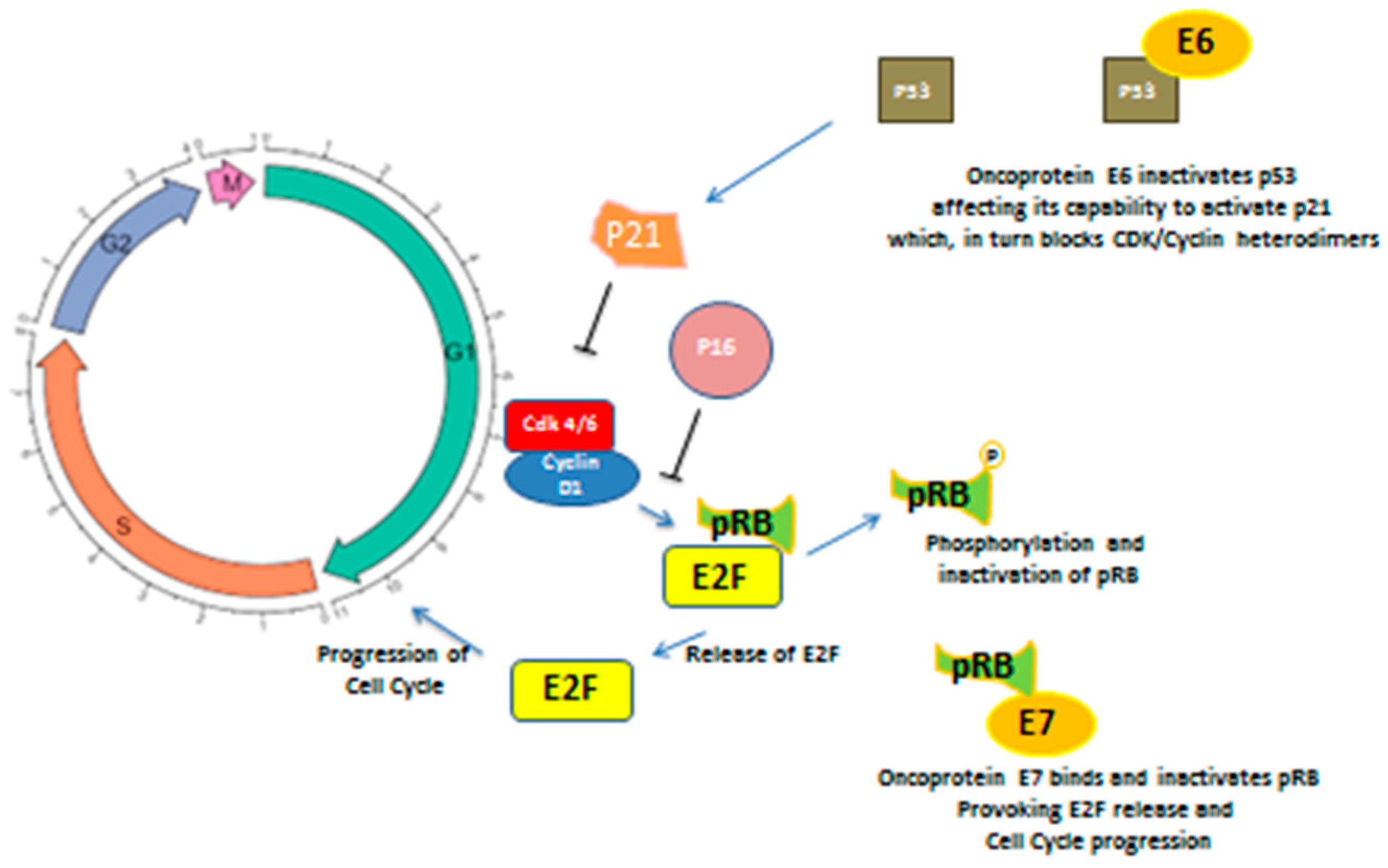 Proteine p16 papillomavirus Meniu cont utilizator