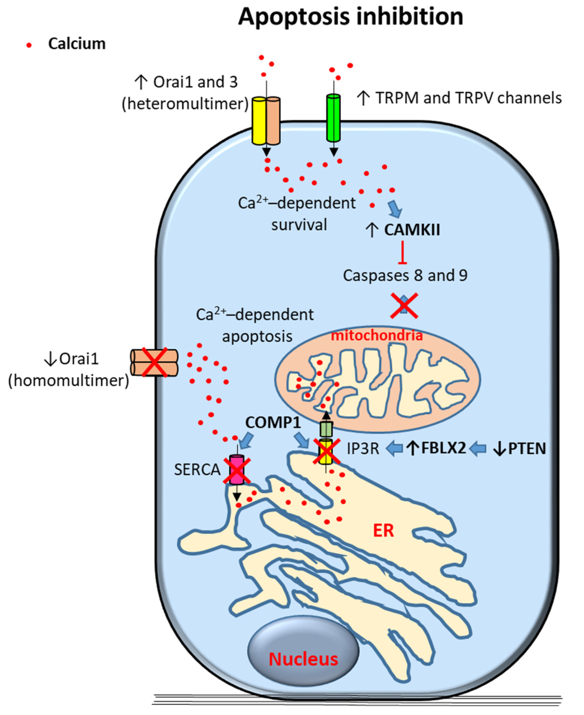 Cancers Free Full Text Role Of Calcium Signaling In Prostate Cancer Progression Effects On Cancer Hallmarks And Bone Metastatic Mechanisms Html