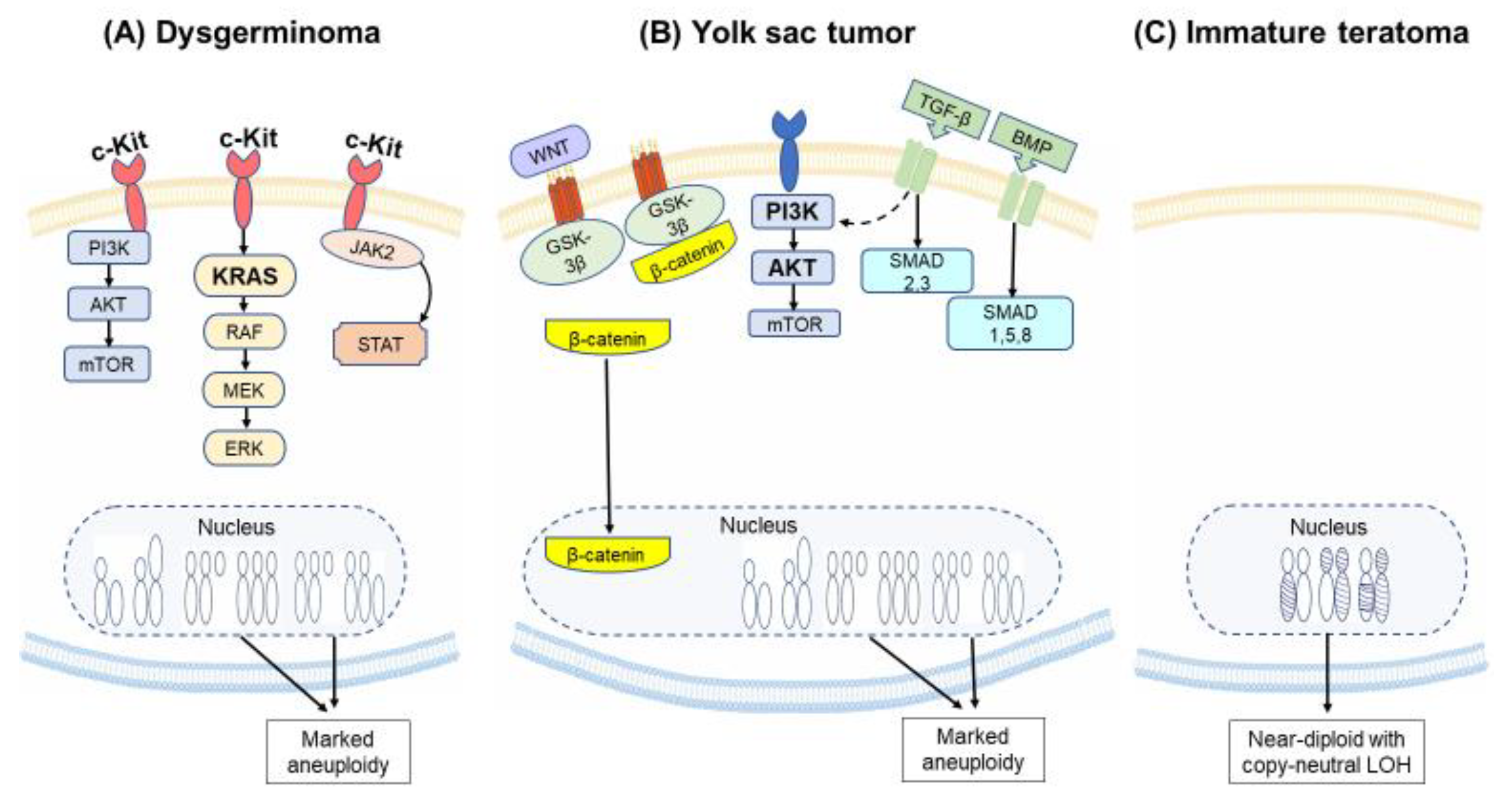 Cancers Free Full Text Molecular Pathways And Targeted Therapies For Malignant Ovarian Germ Cell Tumors And Sex Cord Stromal Tumors A Contemporary Review Html