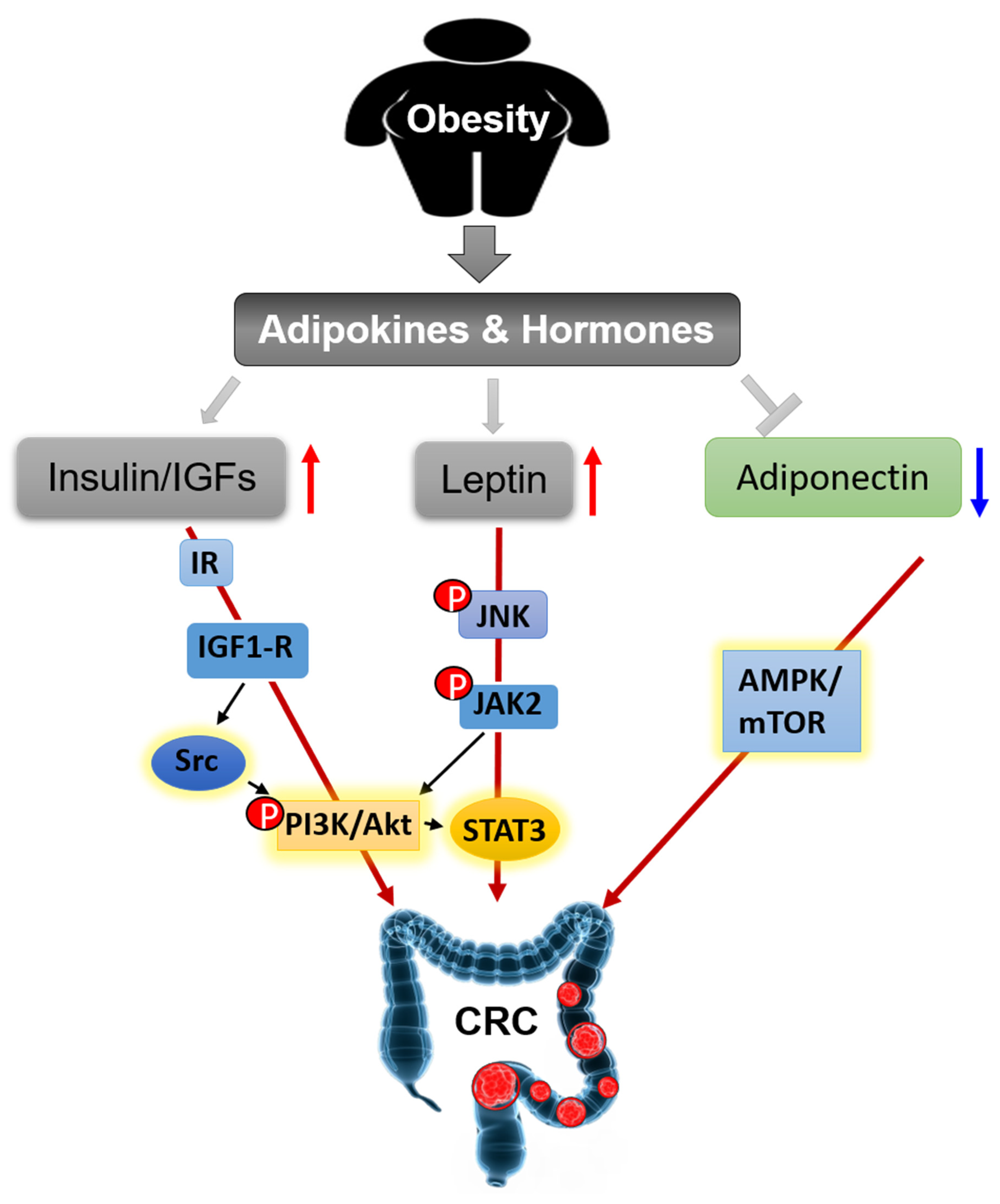 Cancers Free Full Text Linking Obesity With Colorectal Cancer Epidemiology And Mechanistic Insights Html