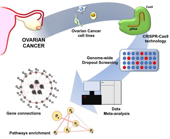 Cancers Free Full Text An Overview Of Candidate Therapeutic Target Genes In Ovarian Cancer Html