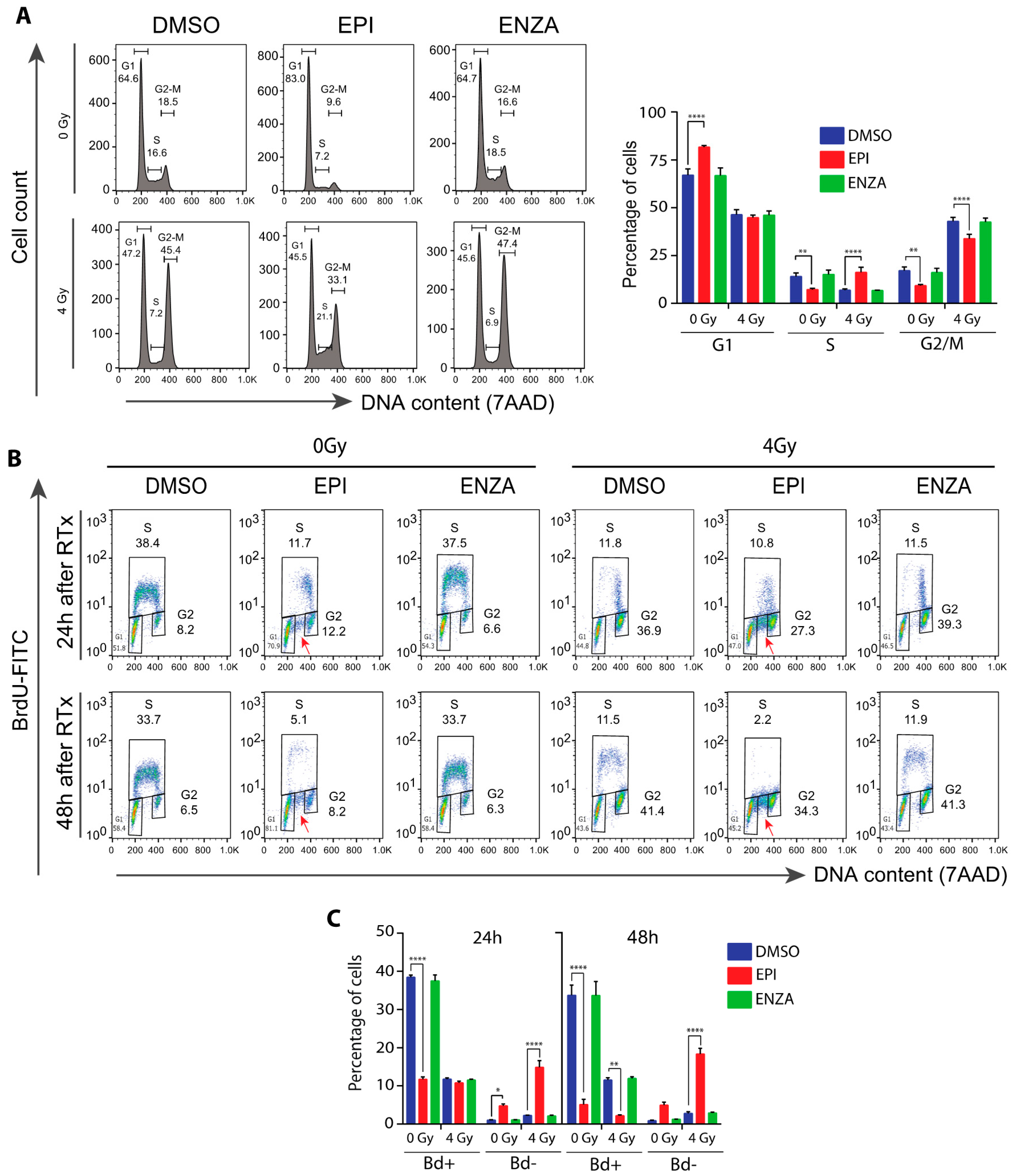 Cancers Free Full Text Ralaniten Sensitizes Enzalutamide Resistant Prostate Cancer To Ionizing Radiation In Prostate Cancer Cells That Express Androgen Receptor Splice Variants Html