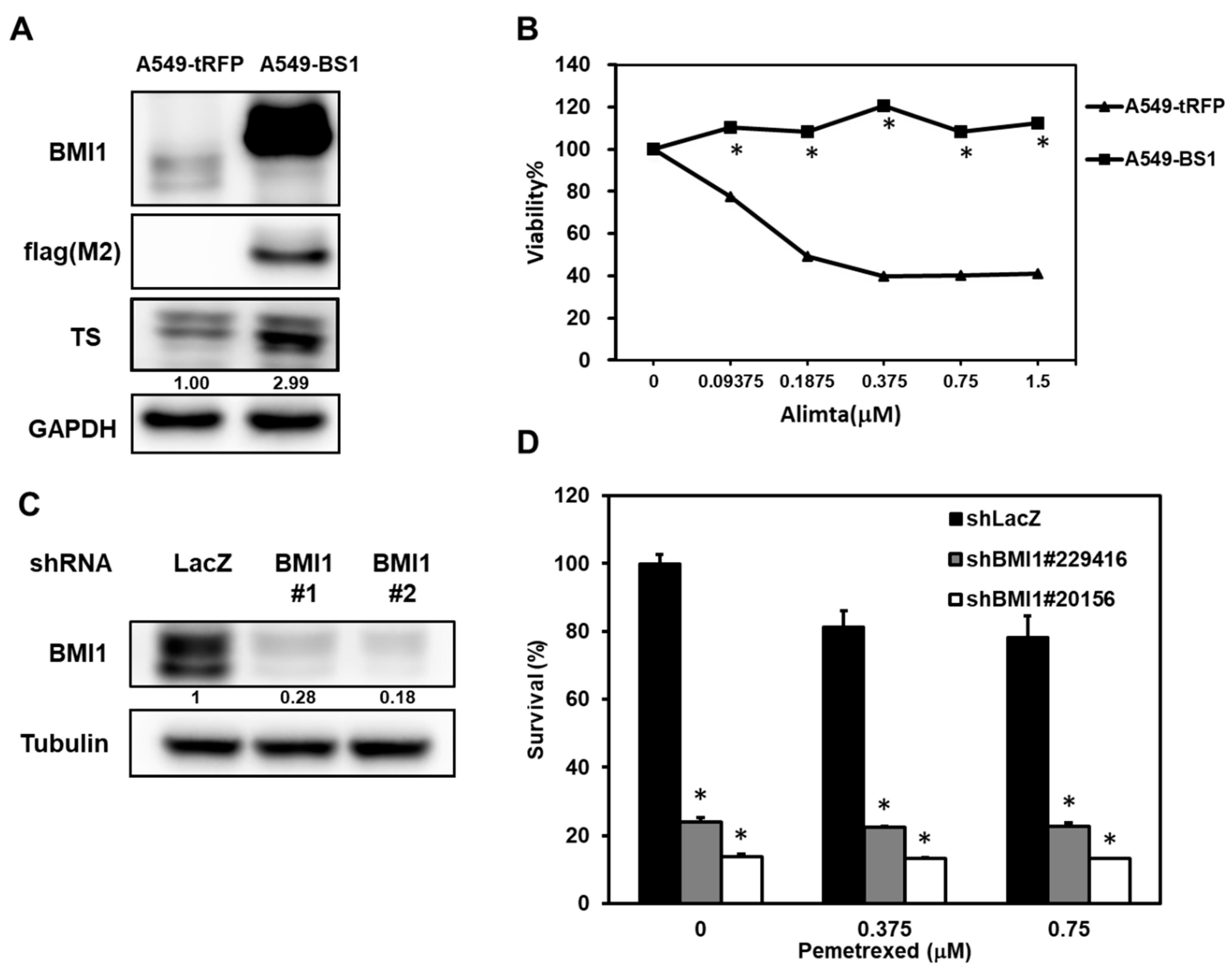 Cancers Free Full Text Bmi1 Mediated Pemetrexed Resistance In Non Small Cell Lung Cancer Cells Is Associated With Increased Sp1 Activation And Cancer Stemness Html