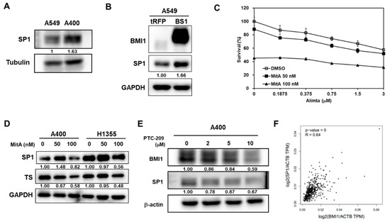 Cancers Free Full Text Bmi1 Mediated Pemetrexed Resistance In Non Small Cell Lung Cancer Cells Is Associated With Increased Sp1 Activation And Cancer Stemness