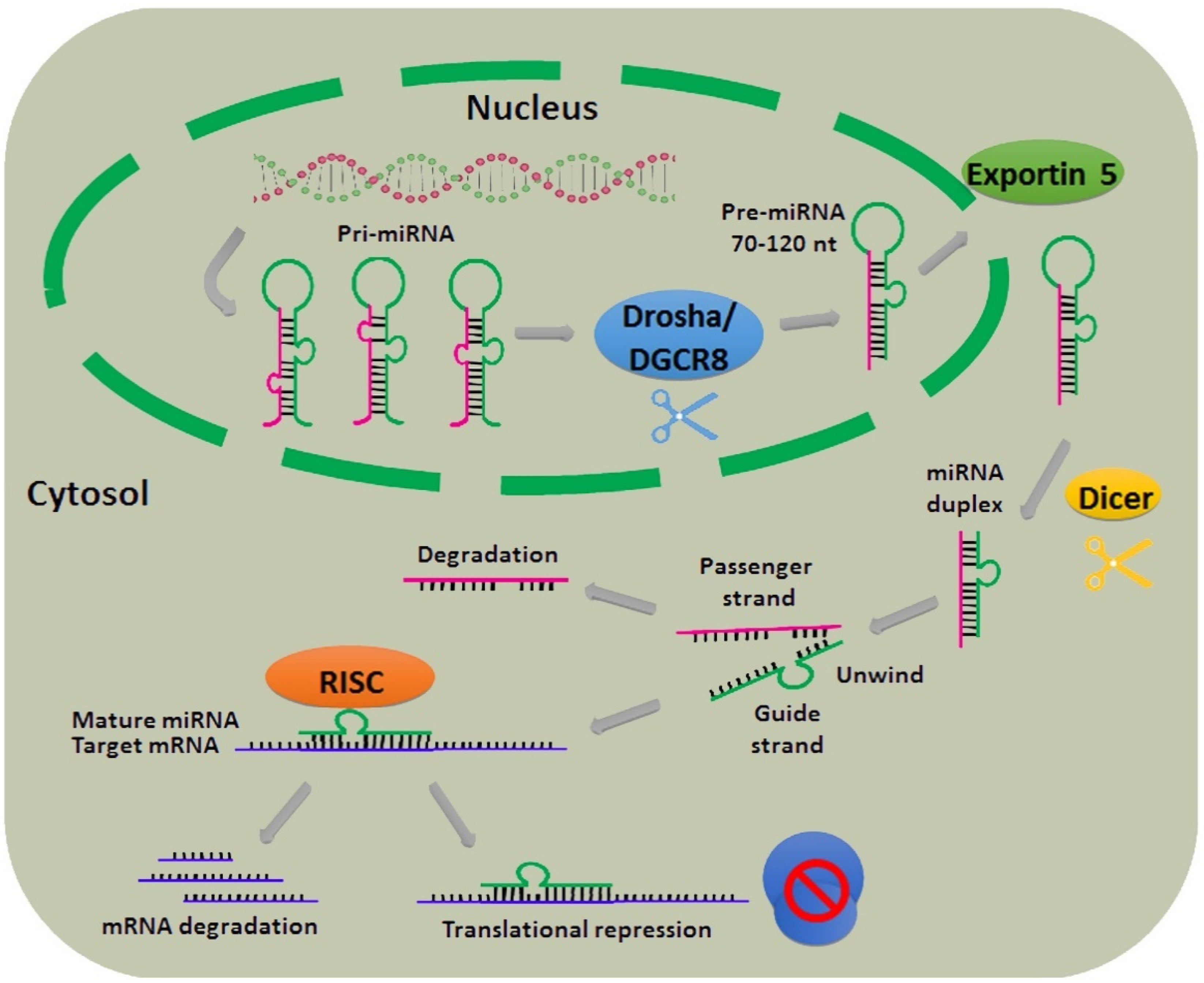 Integrated Approaches To Mirnas Target Definition