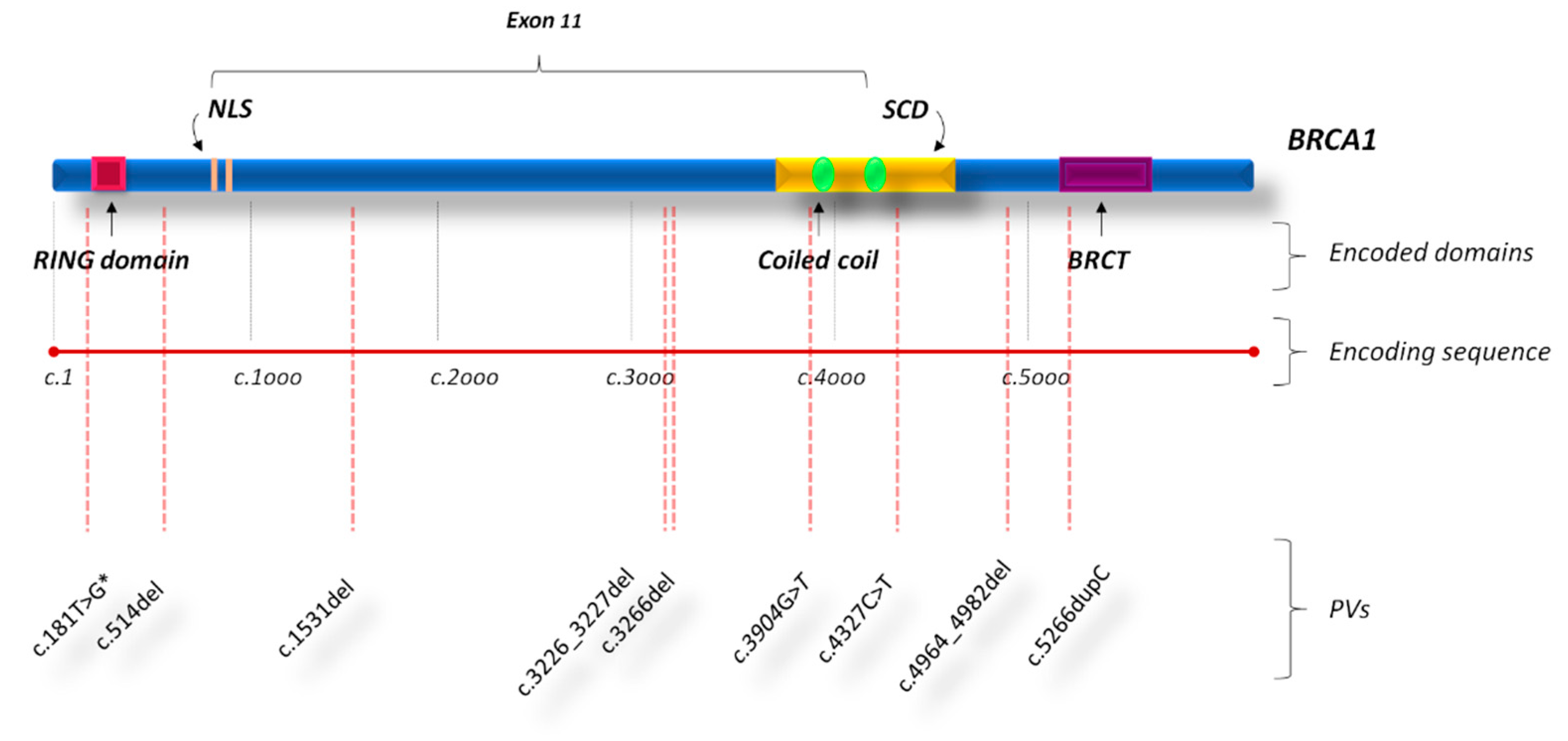 Cancers Free Full Text Detection Of Germline Mutations In A Cohort Of 139 Patients With Bilateral Breast Cancer By Multi Gene Panel Testing Impact Of Pathogenic Variants In Other Genes Beyond Brca1 2