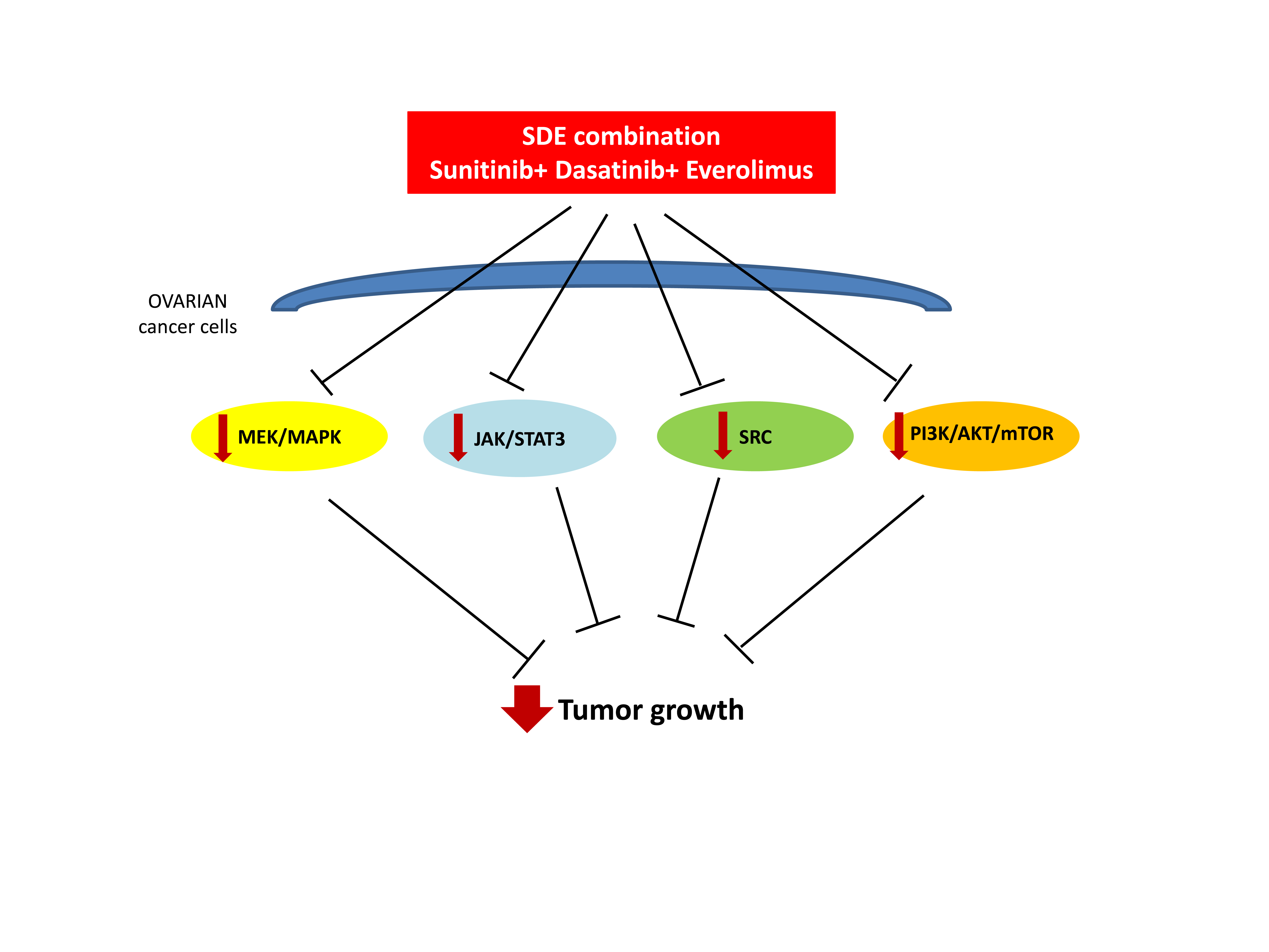 Cancers Free Full Text Synergistic Anti Tumor Activity By Targeting Multiple Signaling Pathways In Ovarian Cancer Html