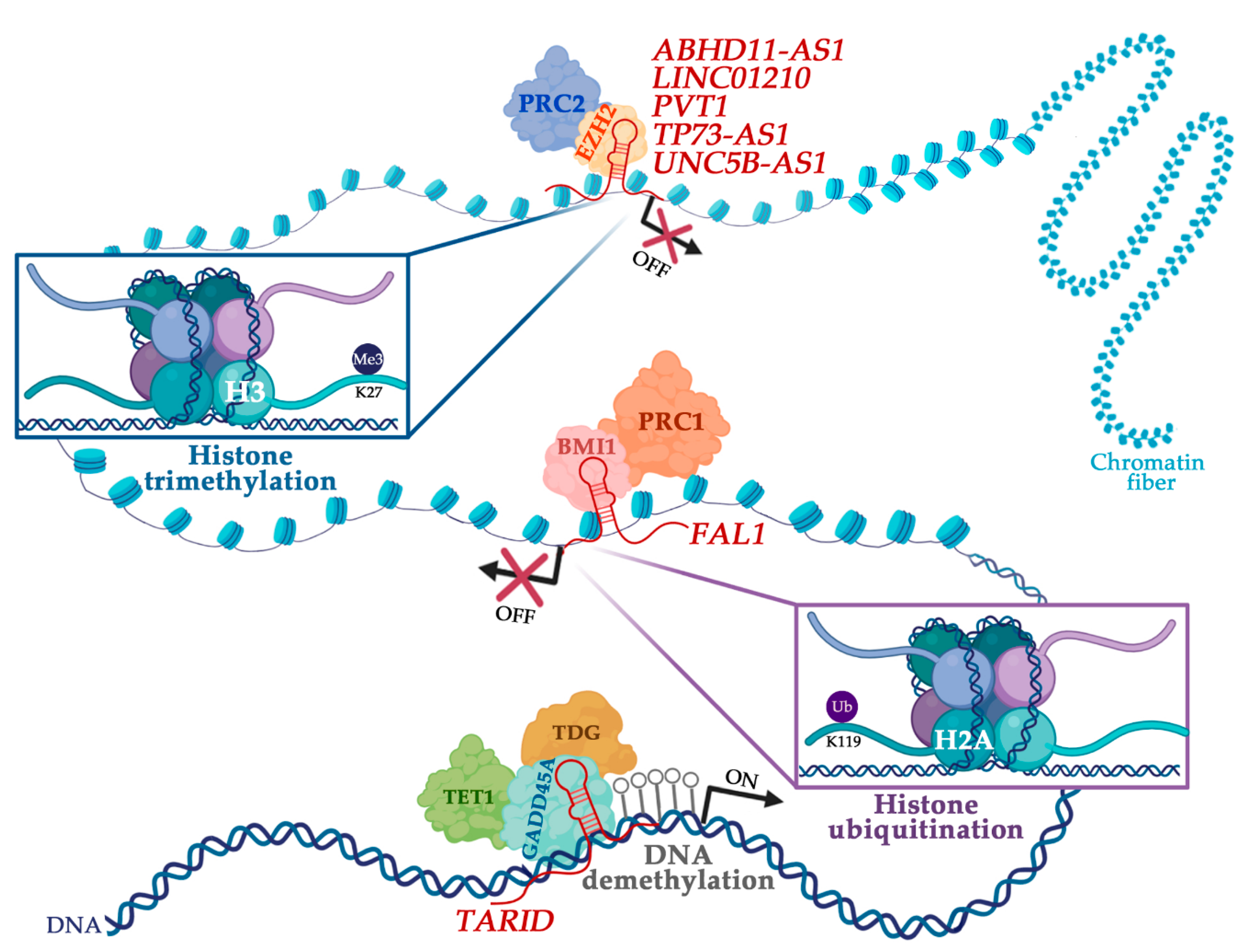 Cancers Free Full Text The Interplay Between Long Noncoding Rnas And Proteins Of The Epigenetic Machinery In Ovarian Cancer