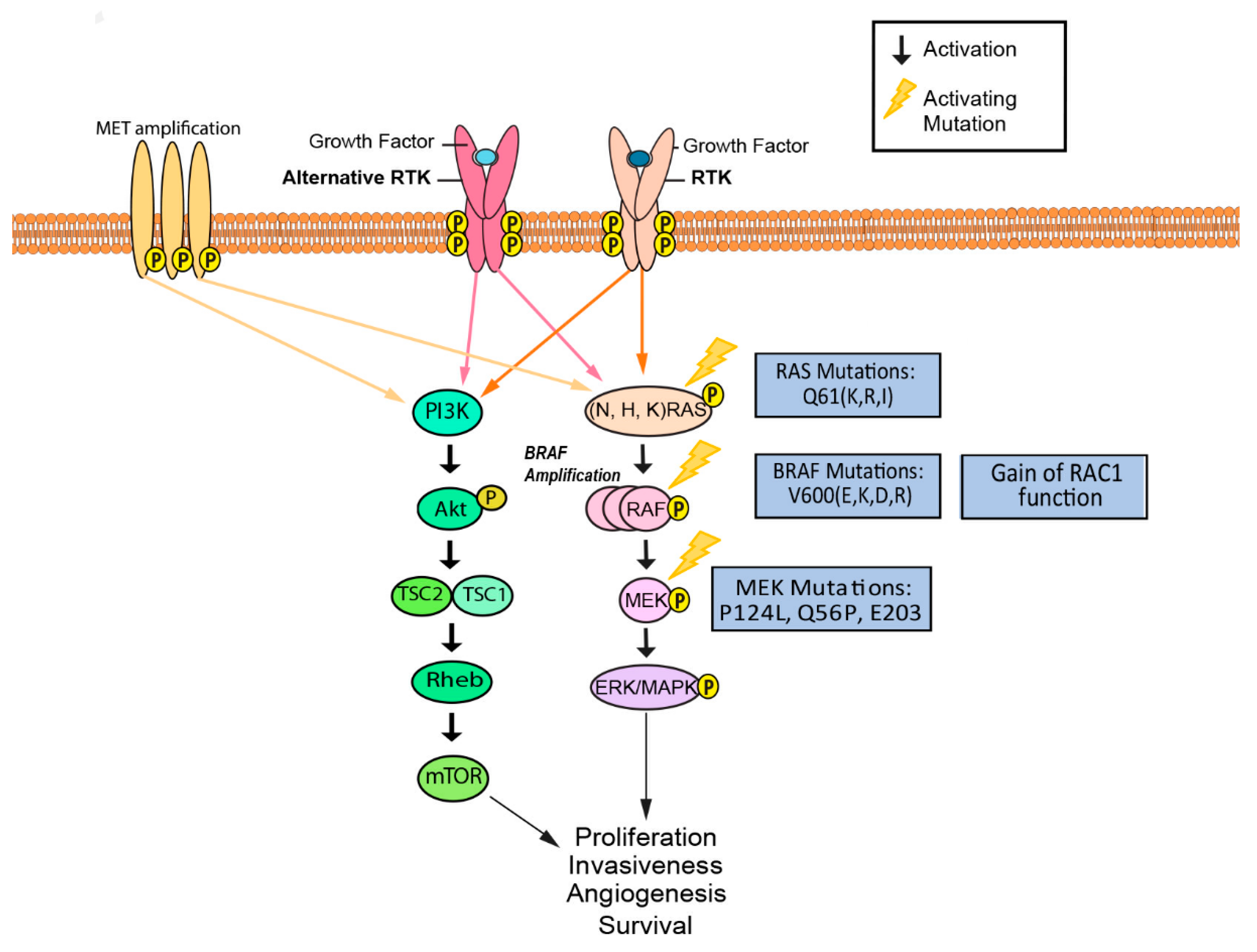 Cancers Free Full Text Resistance To Molecularly Targeted Therapies In Melanoma Html