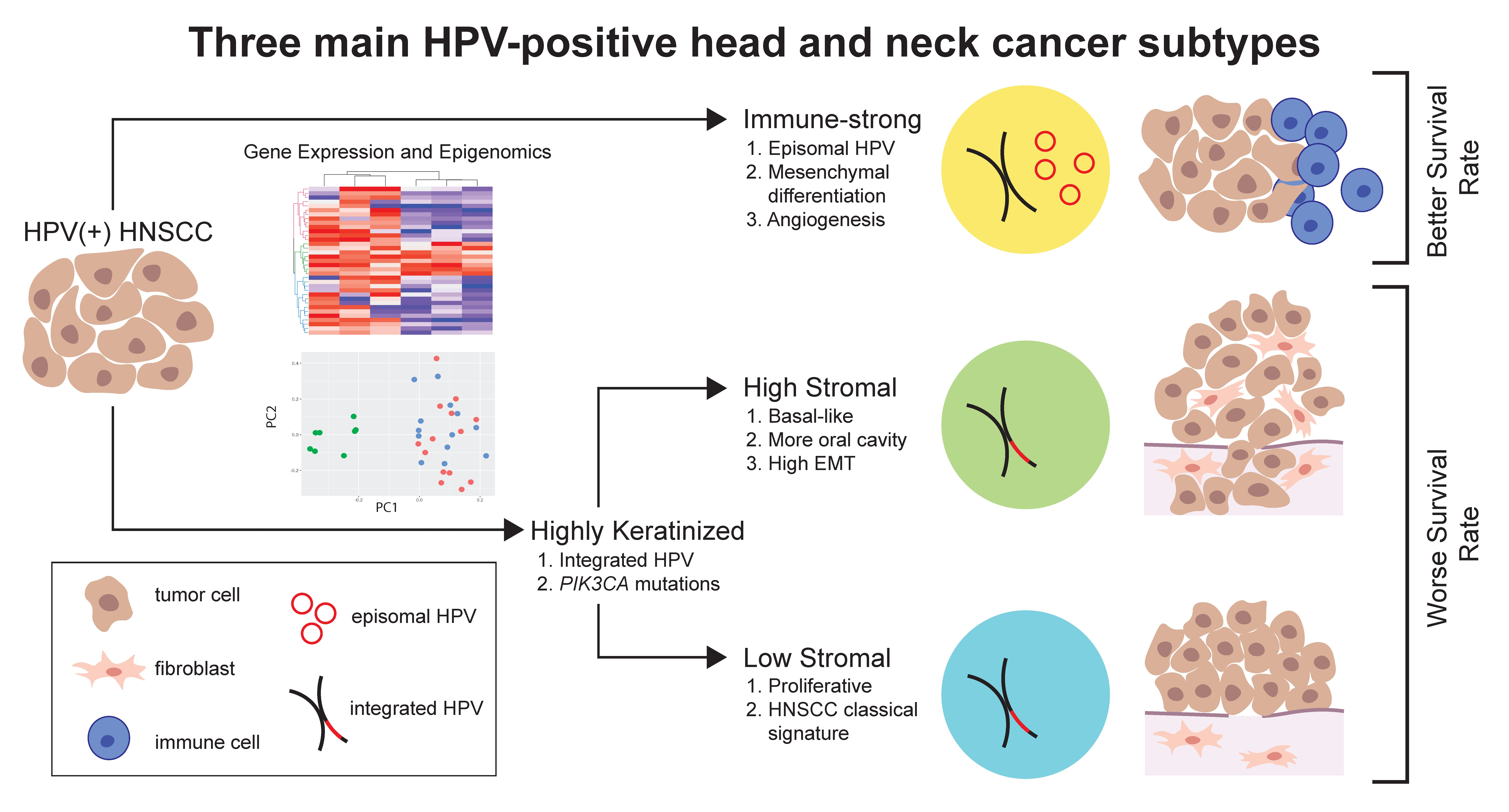hpv subtypes head and neck cancer
