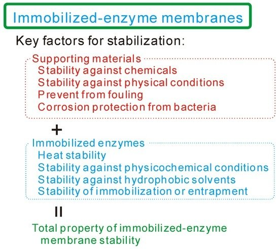How to Lengthen the Long-Term Stability of Enzyme Membranes: Trends and Strategies