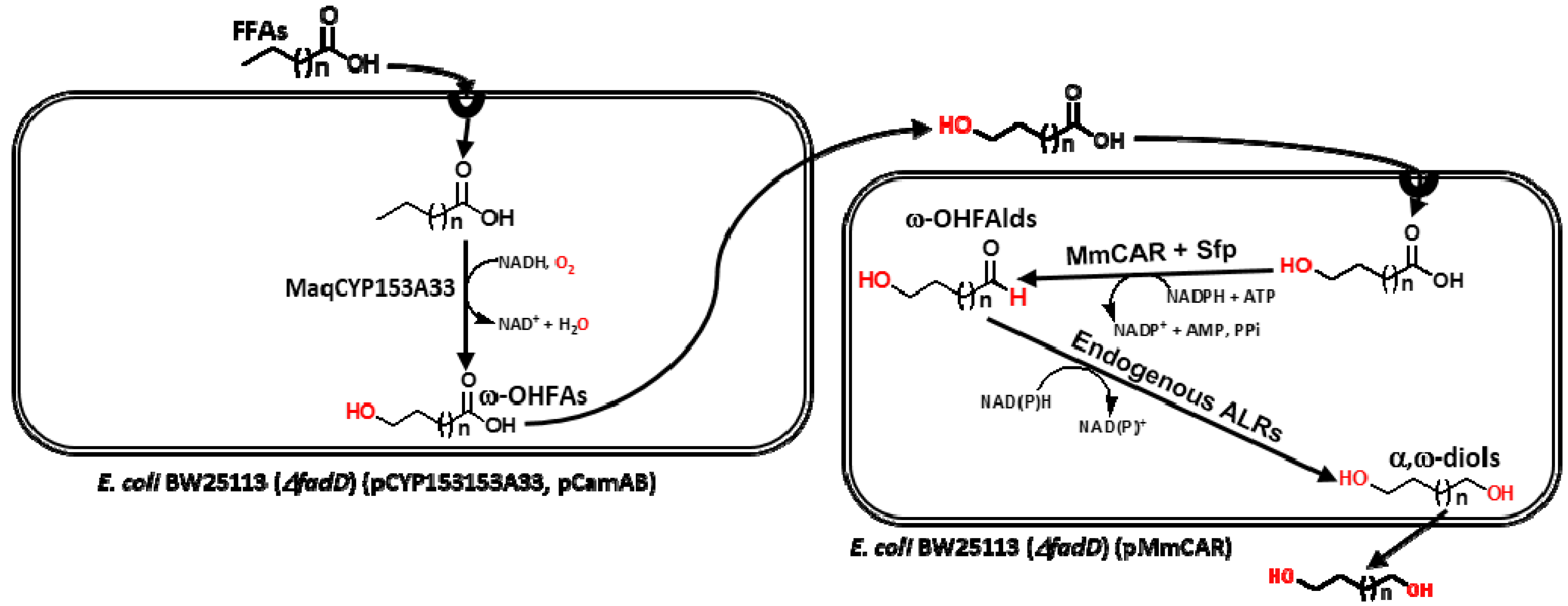 Catalysts   Free FullText   Biosynthesis of Medium to