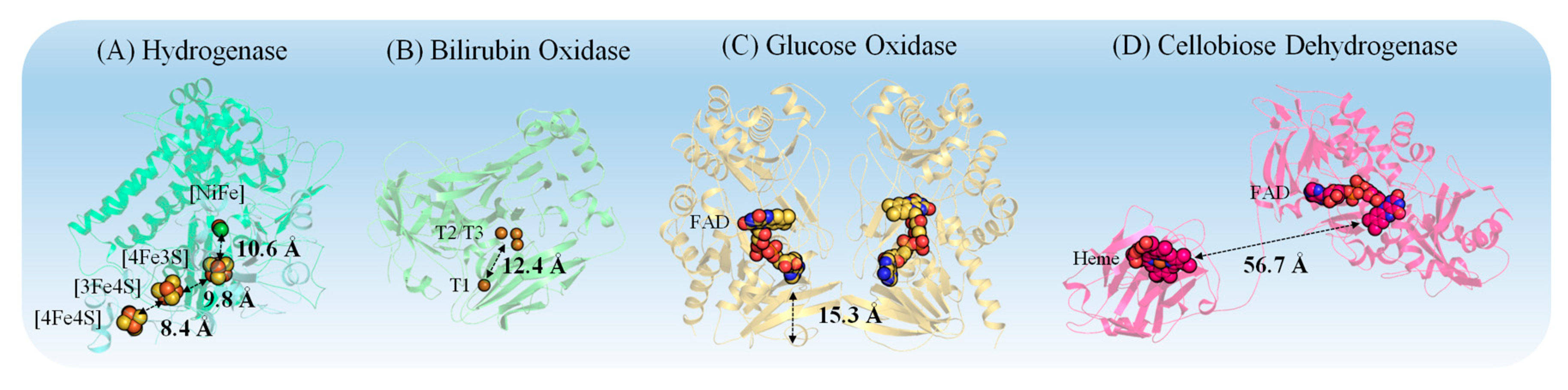 Catalysts | Free Full-Text | Controlling Redox Enzyme Orientation at ...