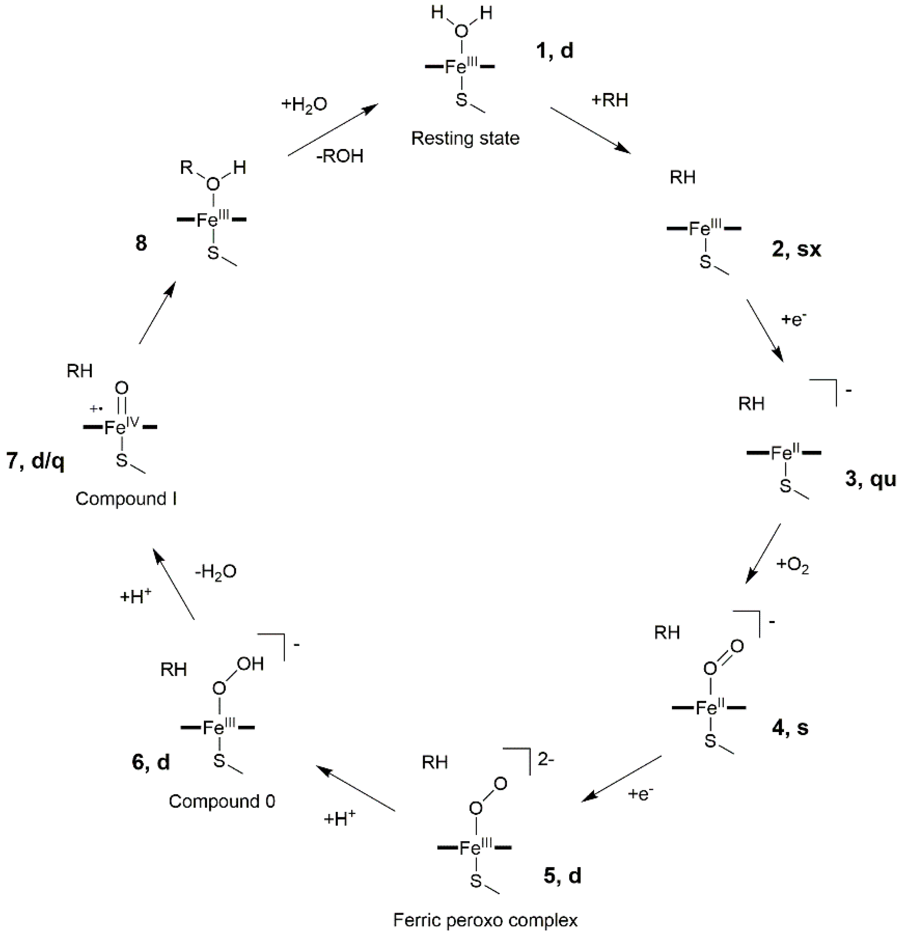Catalysts | Free Full-Text | The Catalytic Mechanism of