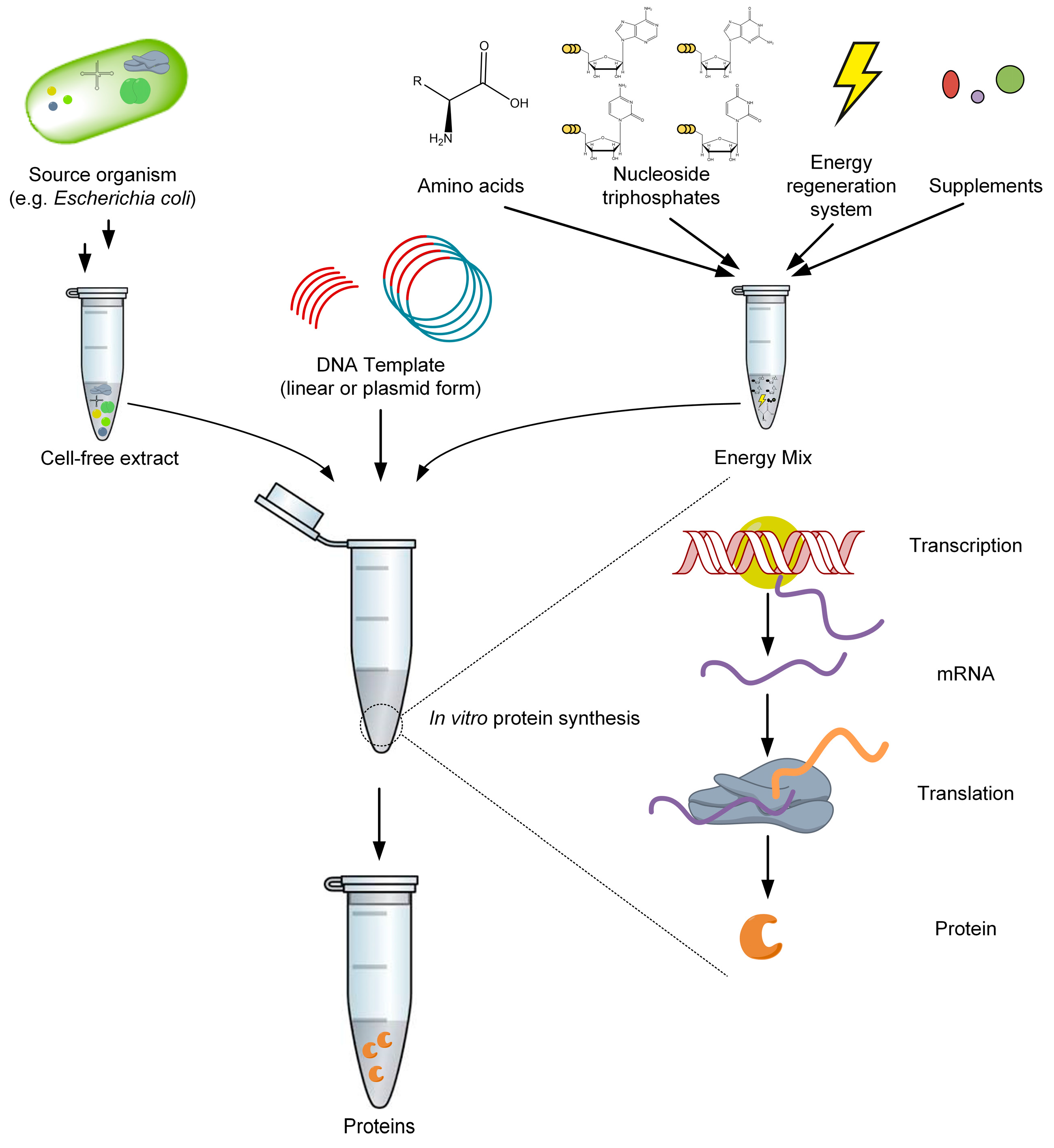 Catalysts | Free Full-Text | Application of Cell-Free