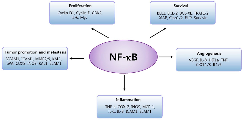 cells  full text roles  nf kb  cancer  inflammatory diseases