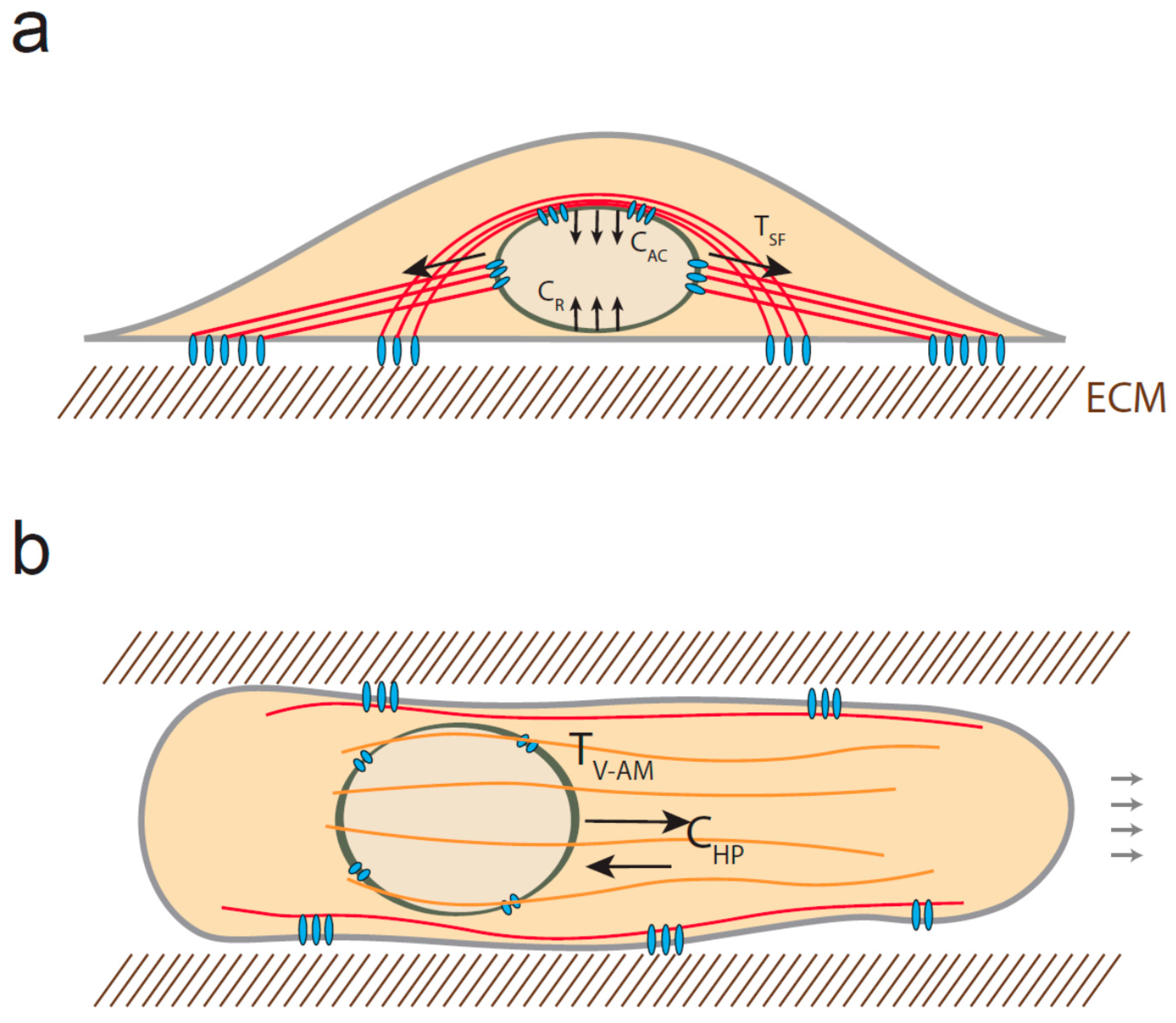 Cells | Free Full-Text | Under Pressure: Mechanical Stress