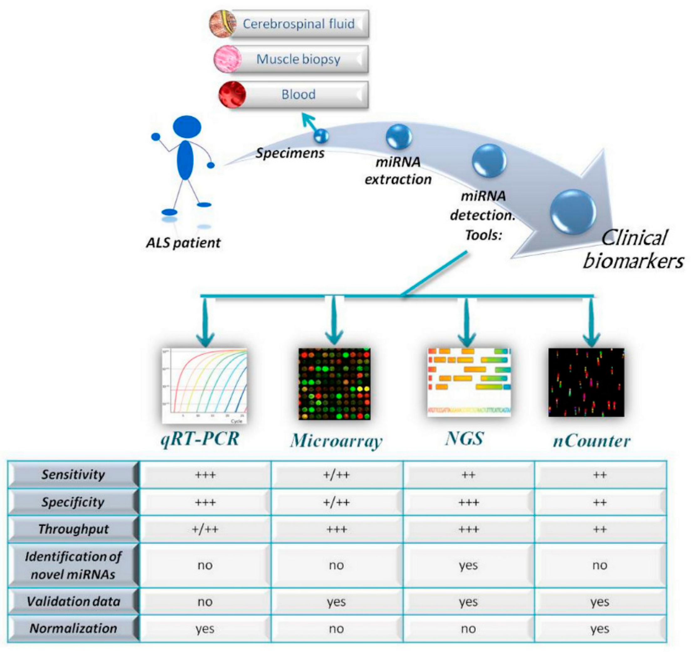Cells | Free Full-Text | MicroRNAs as Biomarkers in