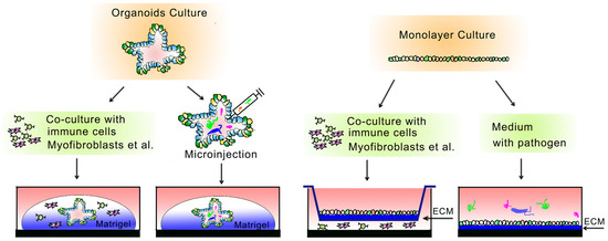 Cells Free Full Text 2d And 3d Based Intestinal Stem Cell Cultures For Personalized Medicine Html