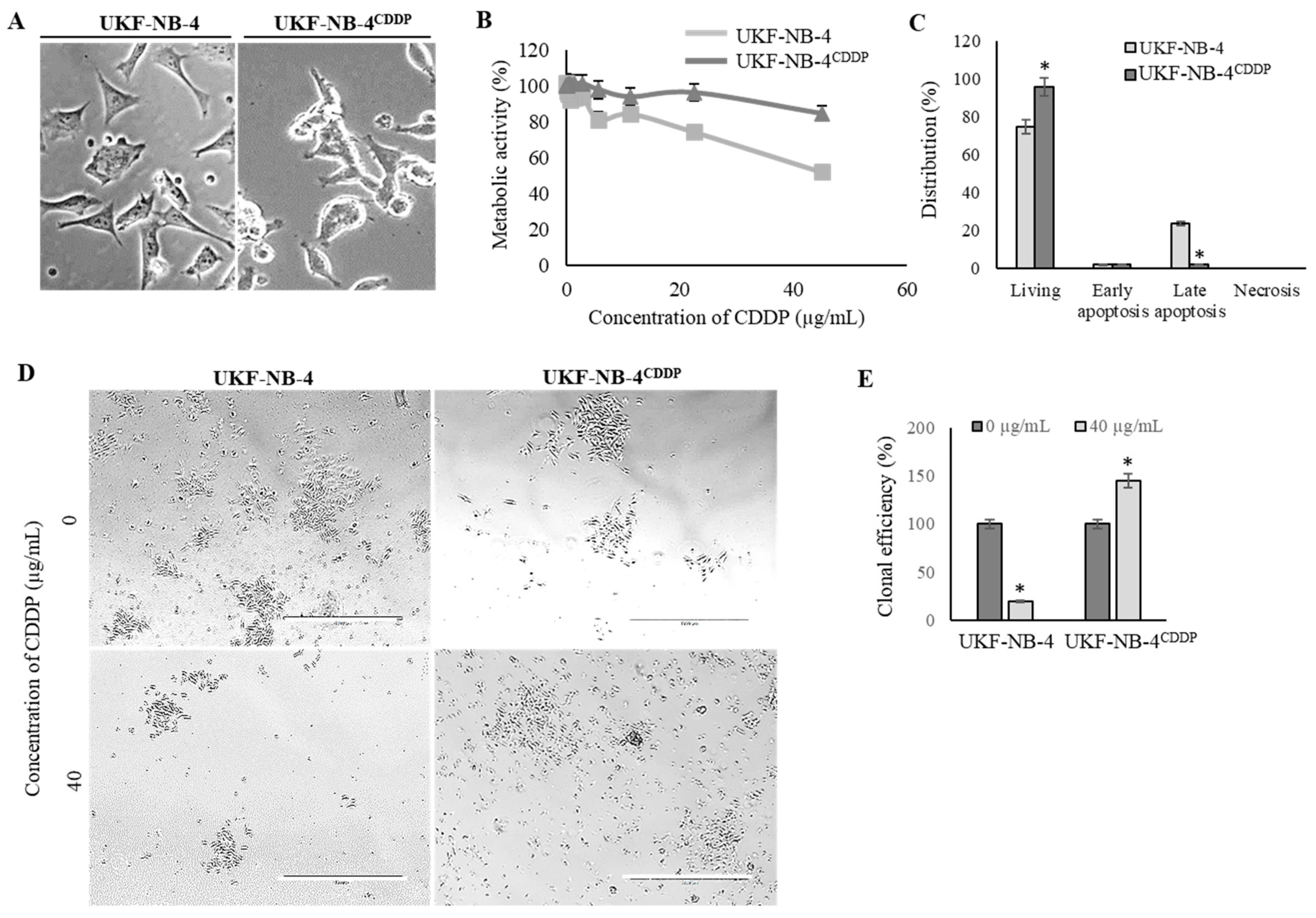 Cells Free Full Text Transcriptomic Landscape Of Cisplatin