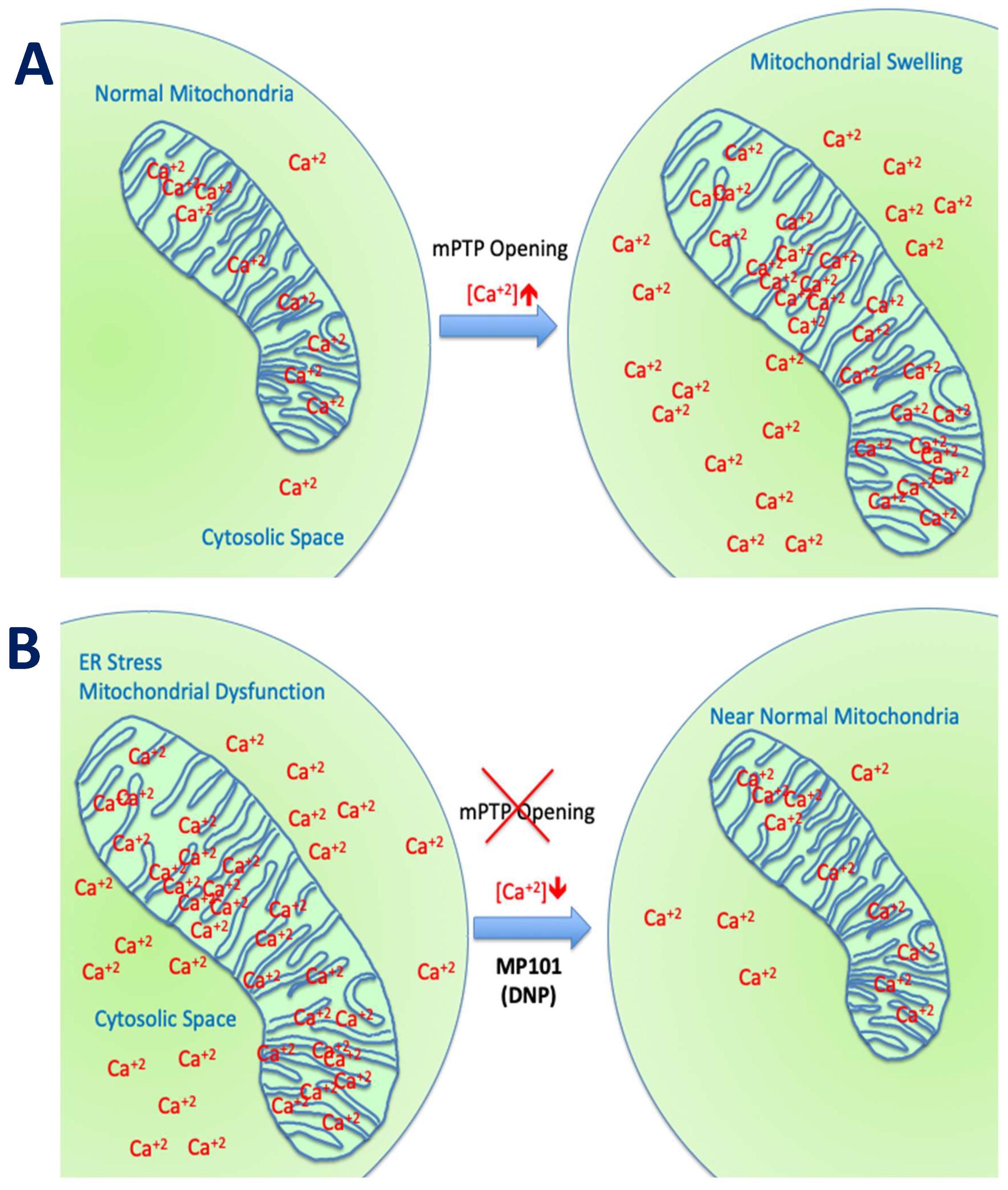 Cells   Free Full-Text   2,4 Dinitrophenol as Medicine   HTML