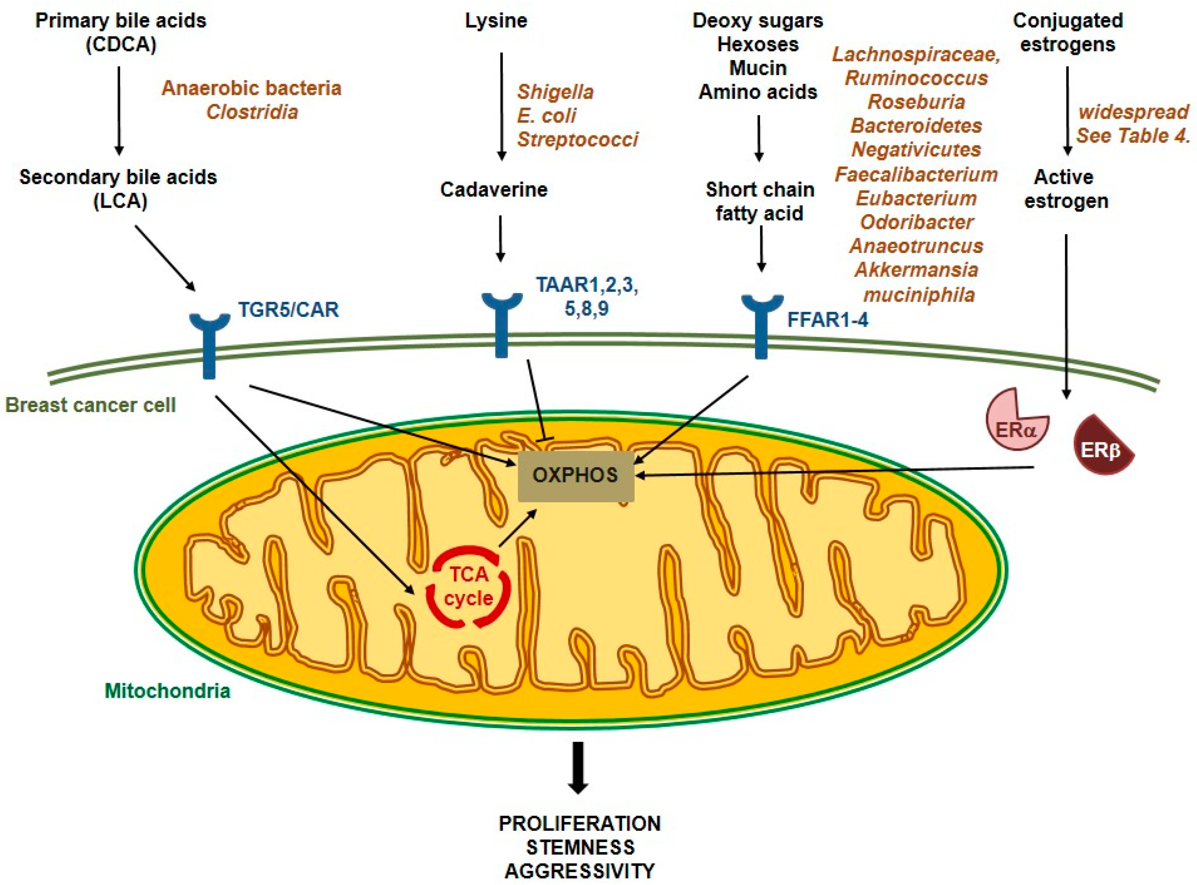 Cells   Free Full-Text   Microbiome—Microbial Metabolome