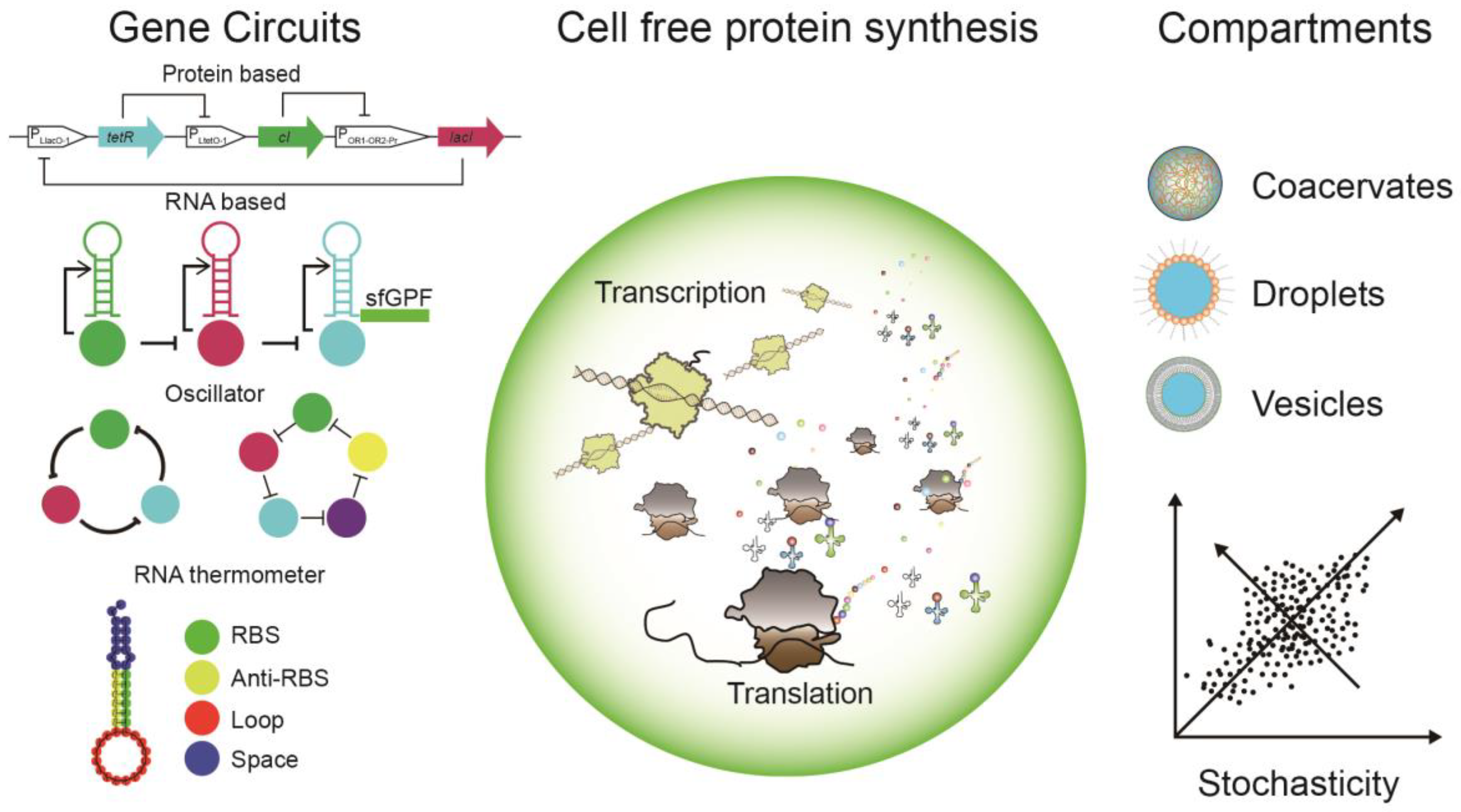 Cells | Free Full-Text | Cell-Free Protein Synthesis