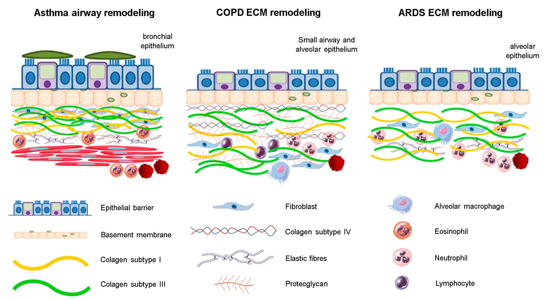Cells | Free Full-Text | Extracellular Matrix Component
