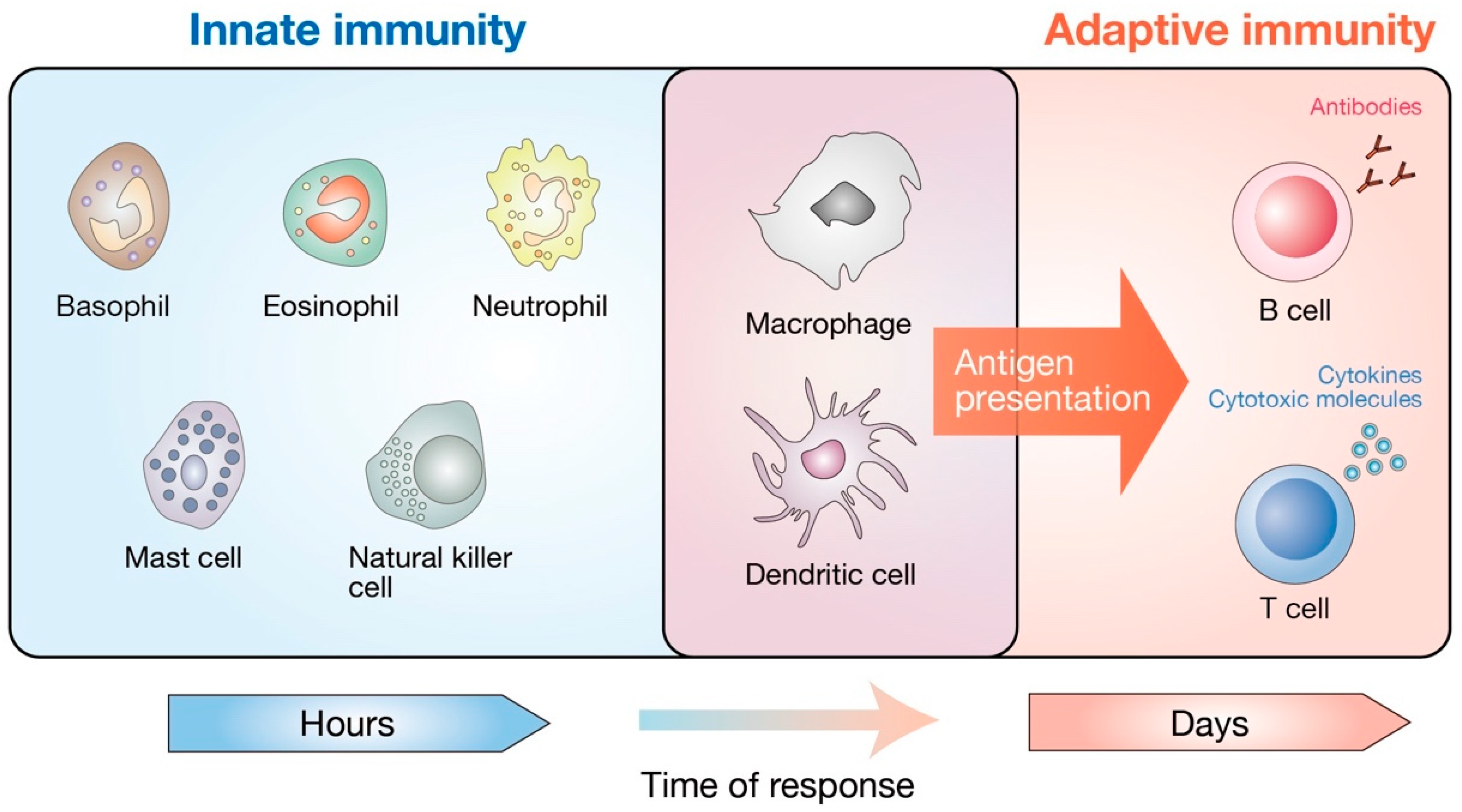Immune System May Play Crucial Role In >> Cells Free Full Text Hippo Pathway In Mammalian Adaptive