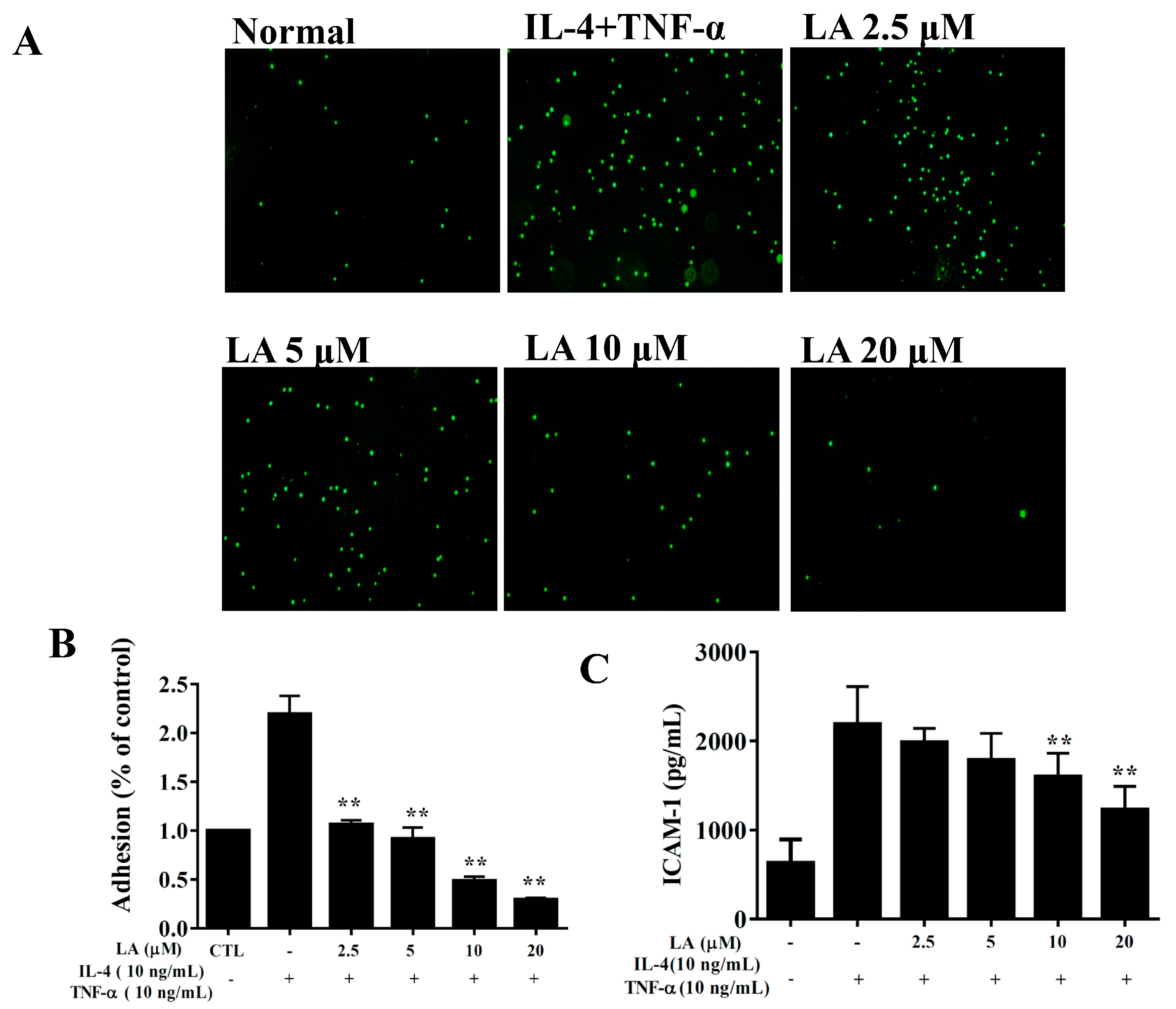 Cells   Free Full-Text   Protective Effects of Licochalcone