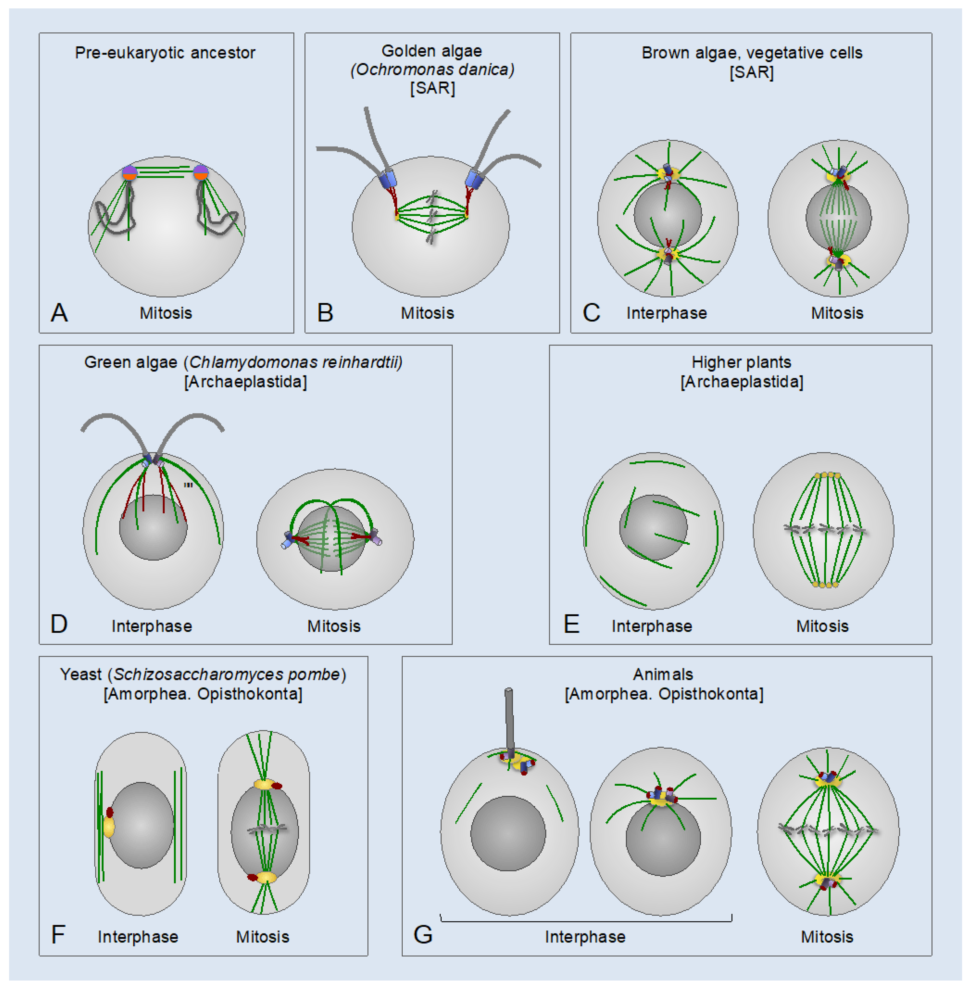 Cells | Free Full-Text | The Centrosome and the Primary