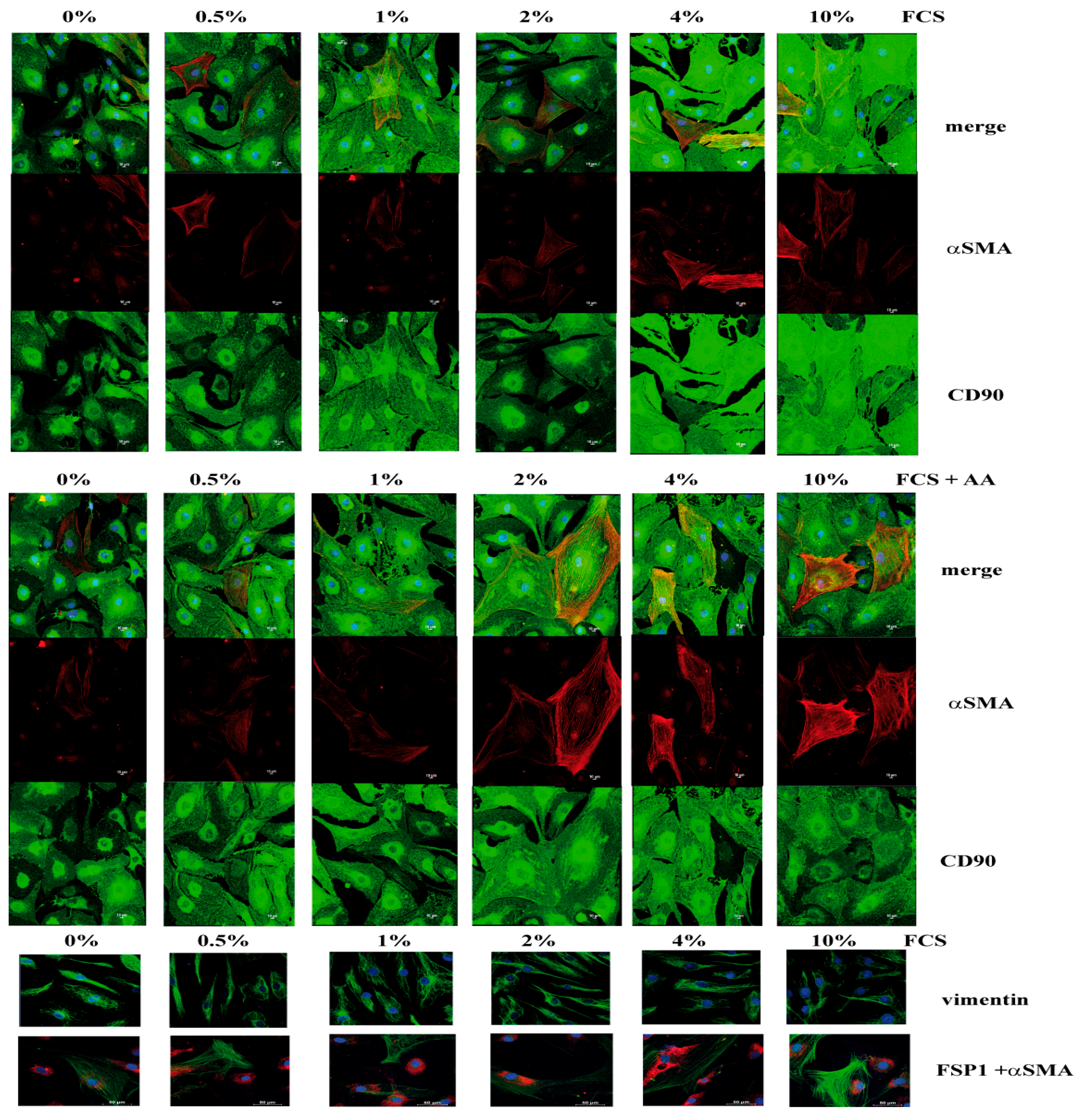 Cells | Free Full-Text | Primary Human Fibroblasts in Culture Switch