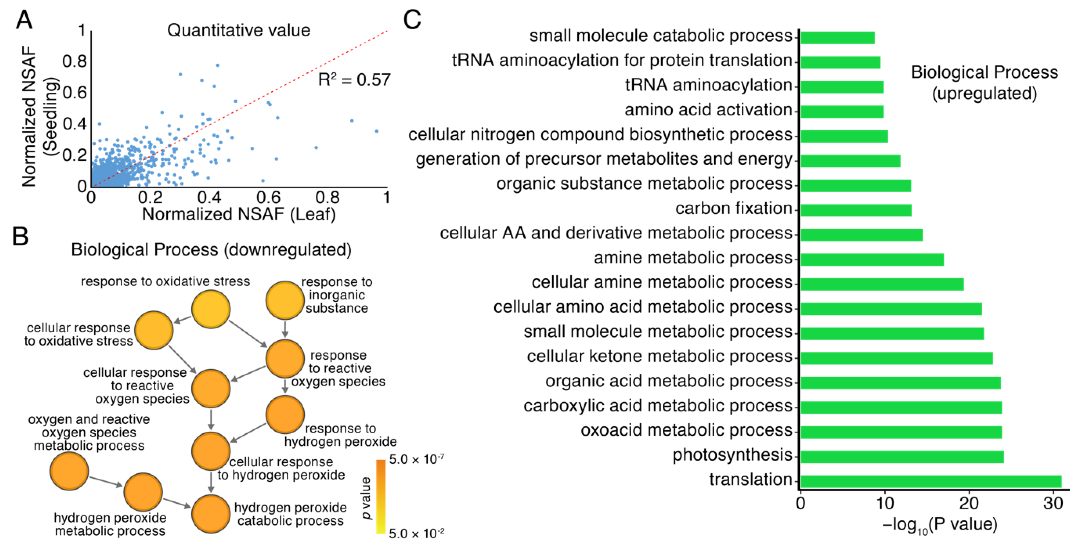 Cells | Free Full-Text | Large Scale Profiling of Protein Isoforms
