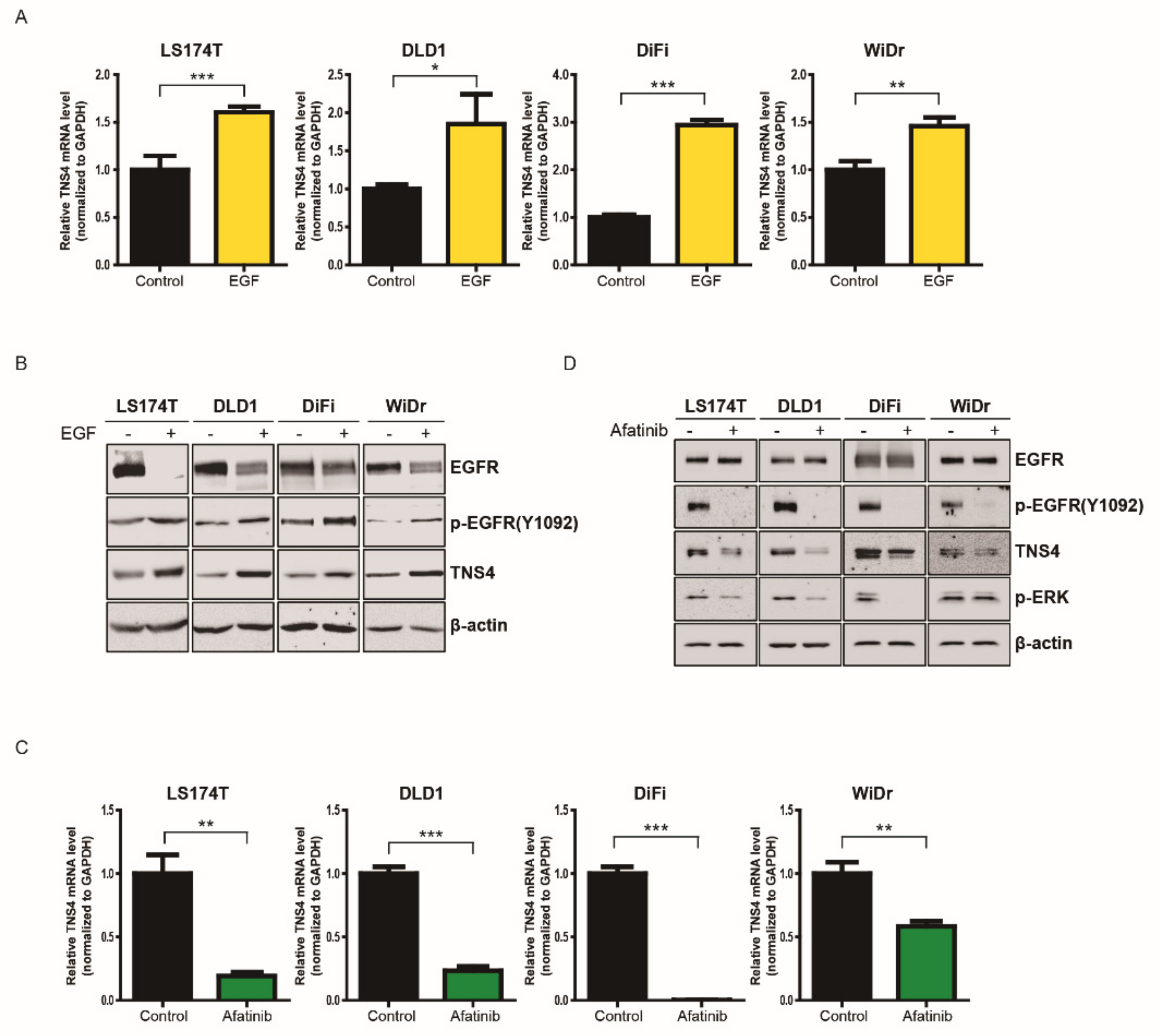 Cells Free Full Text Whole Transcriptome Analysis Identifies Tns4 As A Key Effector Of Cetuximab And A Regulator Of The Oncogenic Activity Of Kras Mutant Colorectal Cancer Cell Lines Html