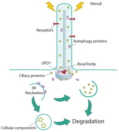 Cells | An Open Access Journal from MDPI