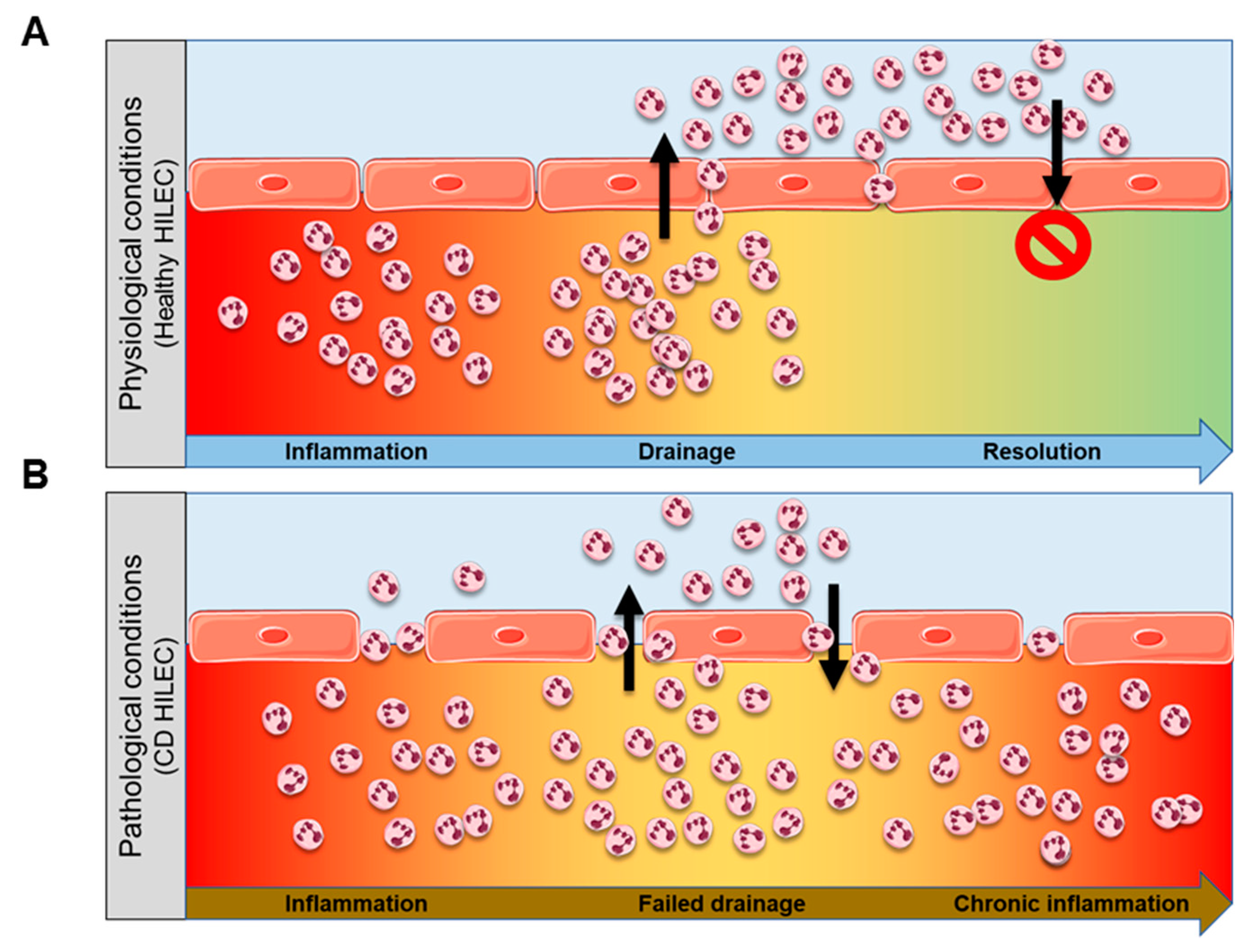 Cells | Free Full-Text | mTOR-Dependent Stimulation of