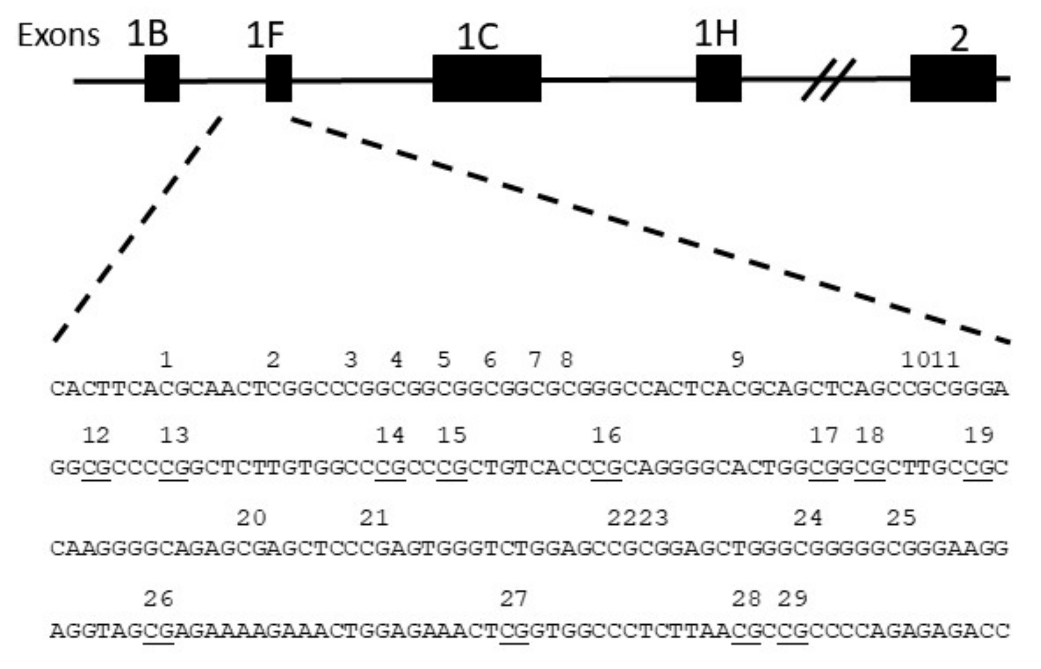 chromosome number sex cell rye in Merseyside