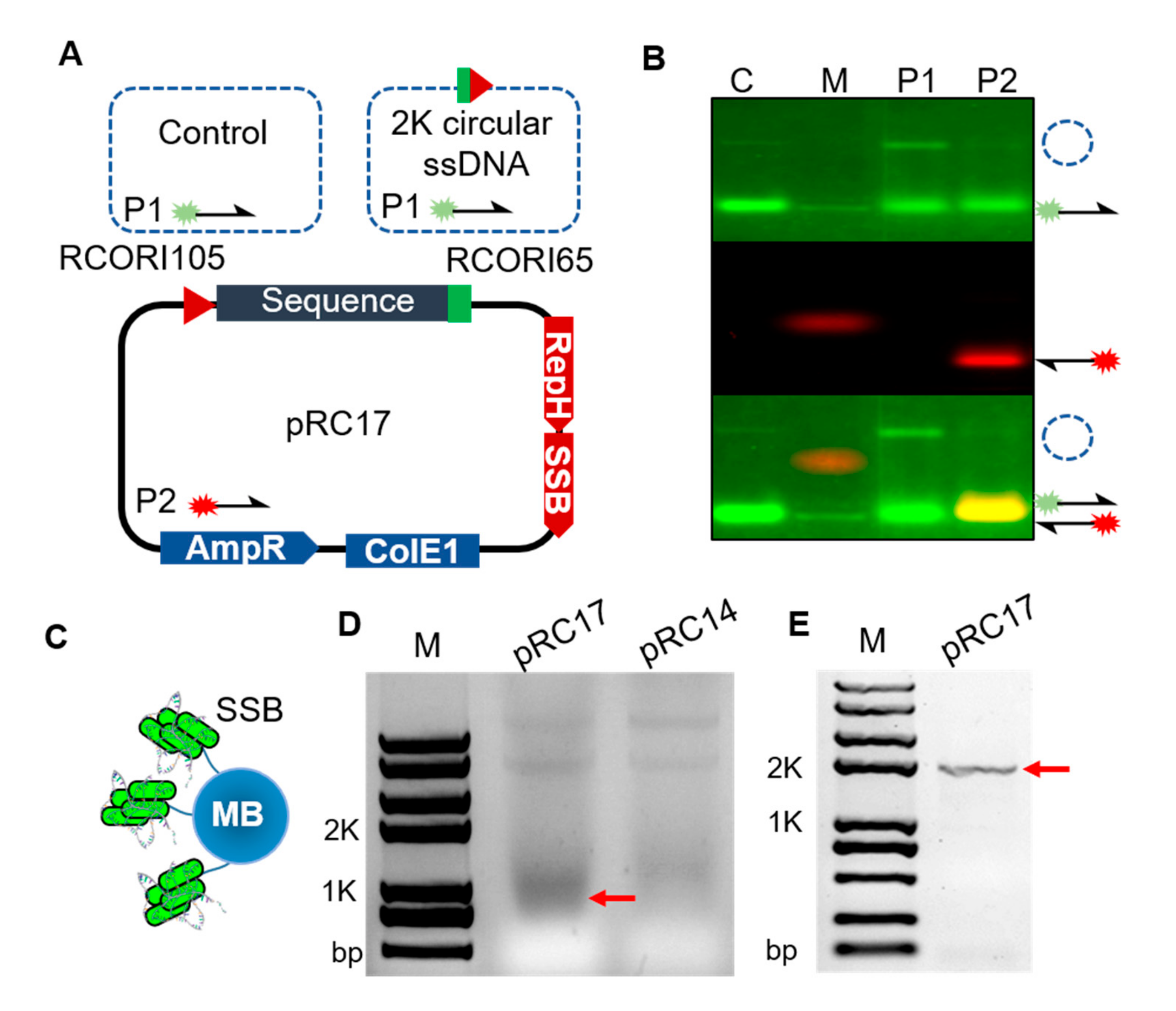 Dynamic Genome Editing Using In