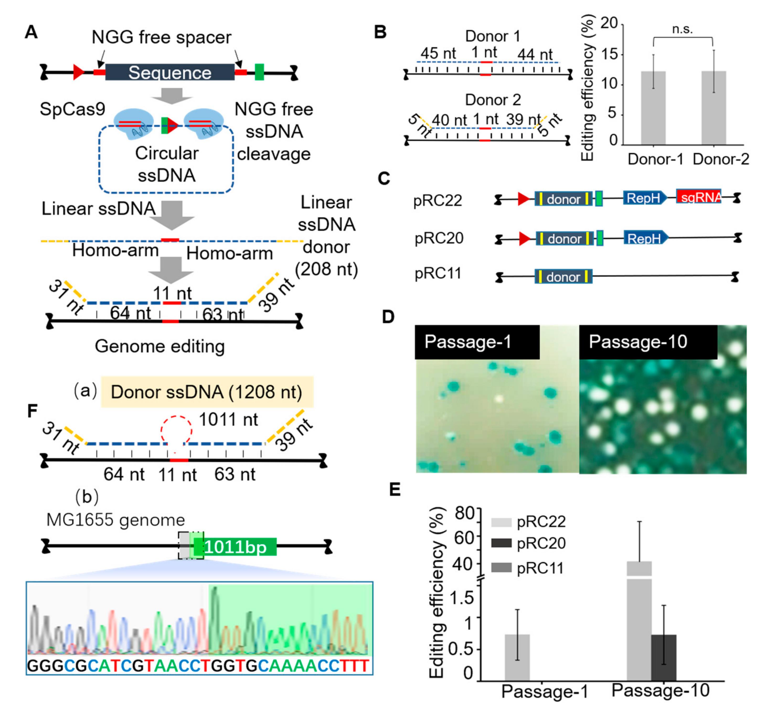 Enhanced Mitogenic Activity of Recombinant Human Vascular ...   2761x2943