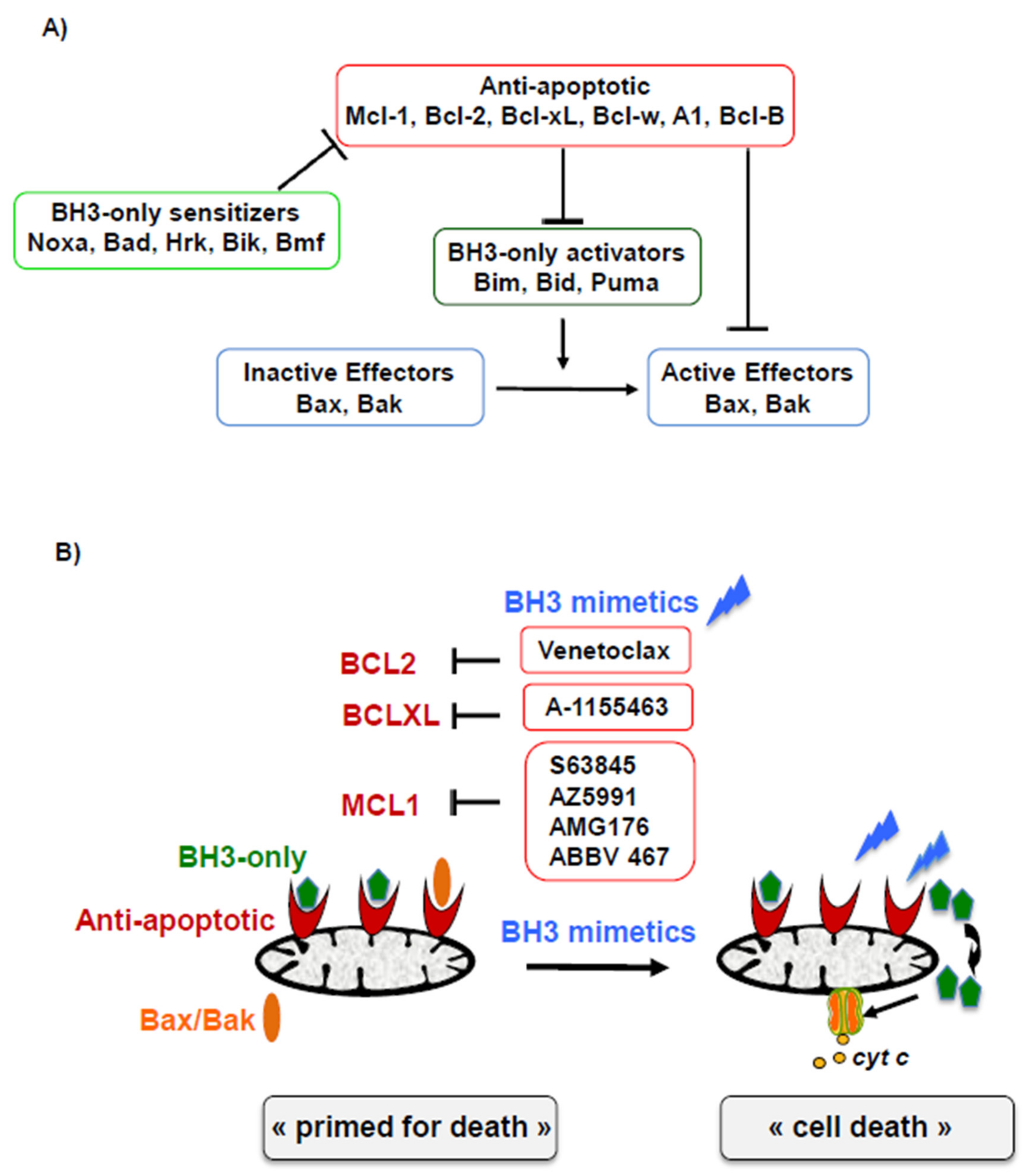 (PDF) Small-molecule BH3 mimetic and pan-Bcl-2 inhibitor