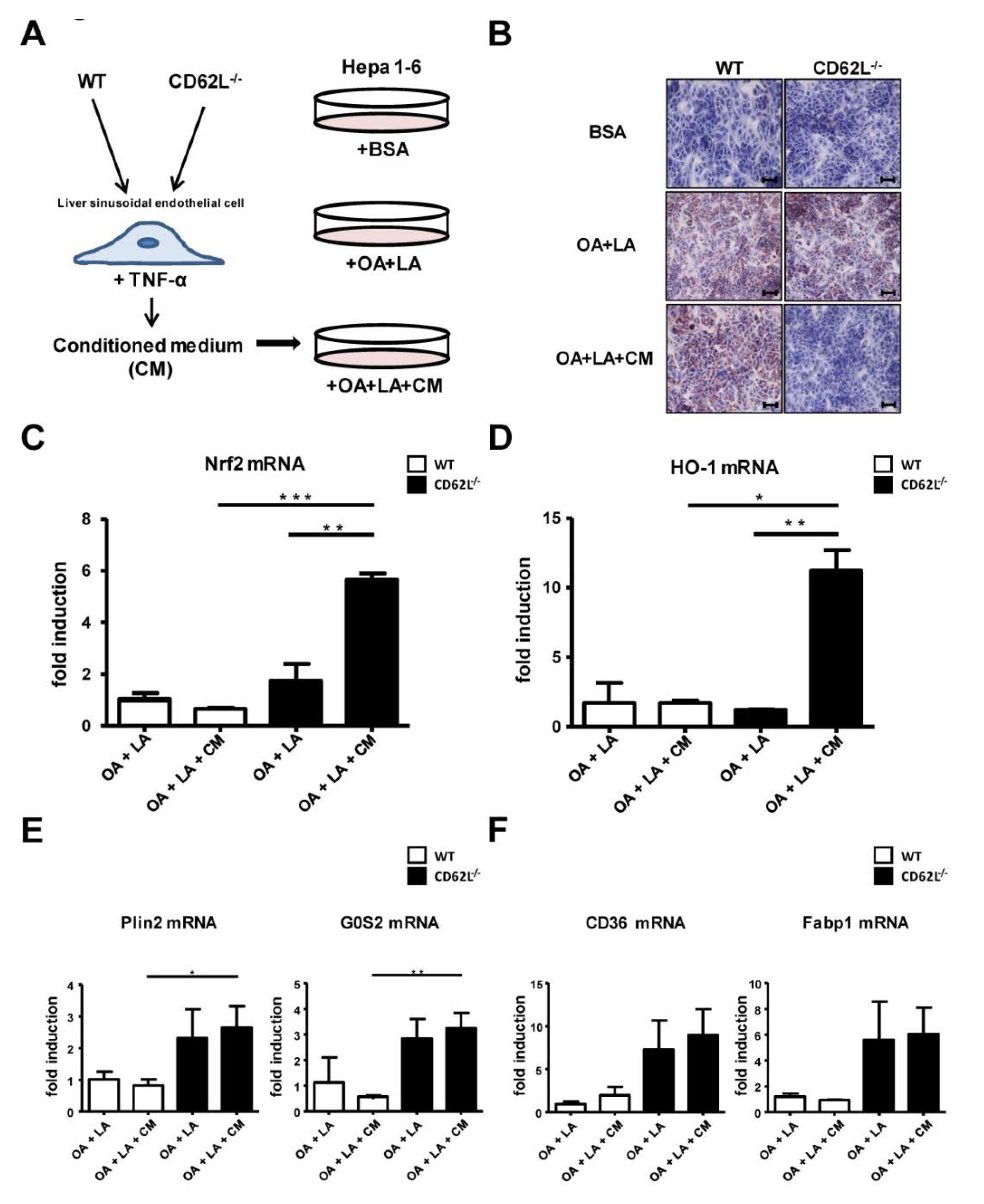foto de Cells | Free Full-Text | L-Selectin/CD62L Is a Key Driver of Non ...