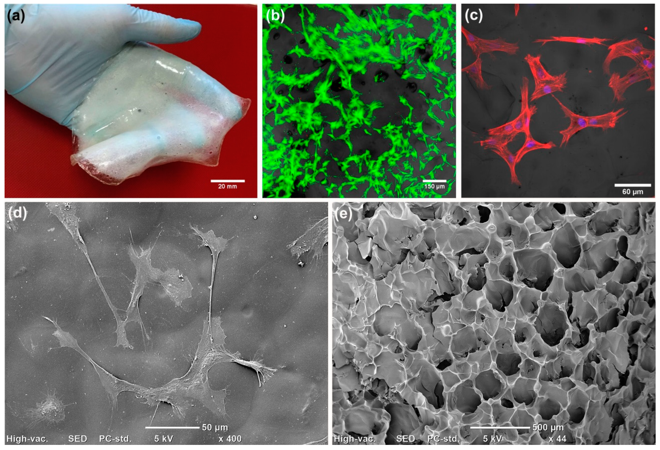 Cells Free Full Text A Concise Review On Tissue Engineered Artificial Skin Grafts For Chronic Wound Treatment Can We Reconstruct Functional Skin Tissue In Vitro Html