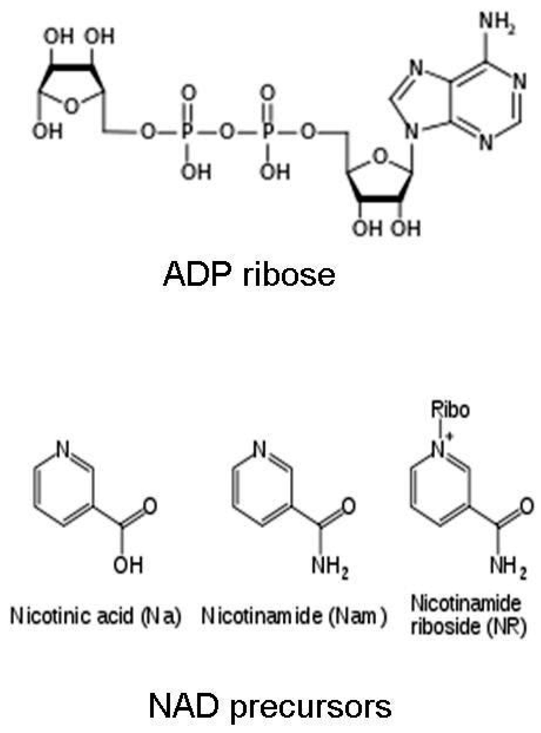 Challenges | Free Full-Text | Roles of Nicotinamide Adenine