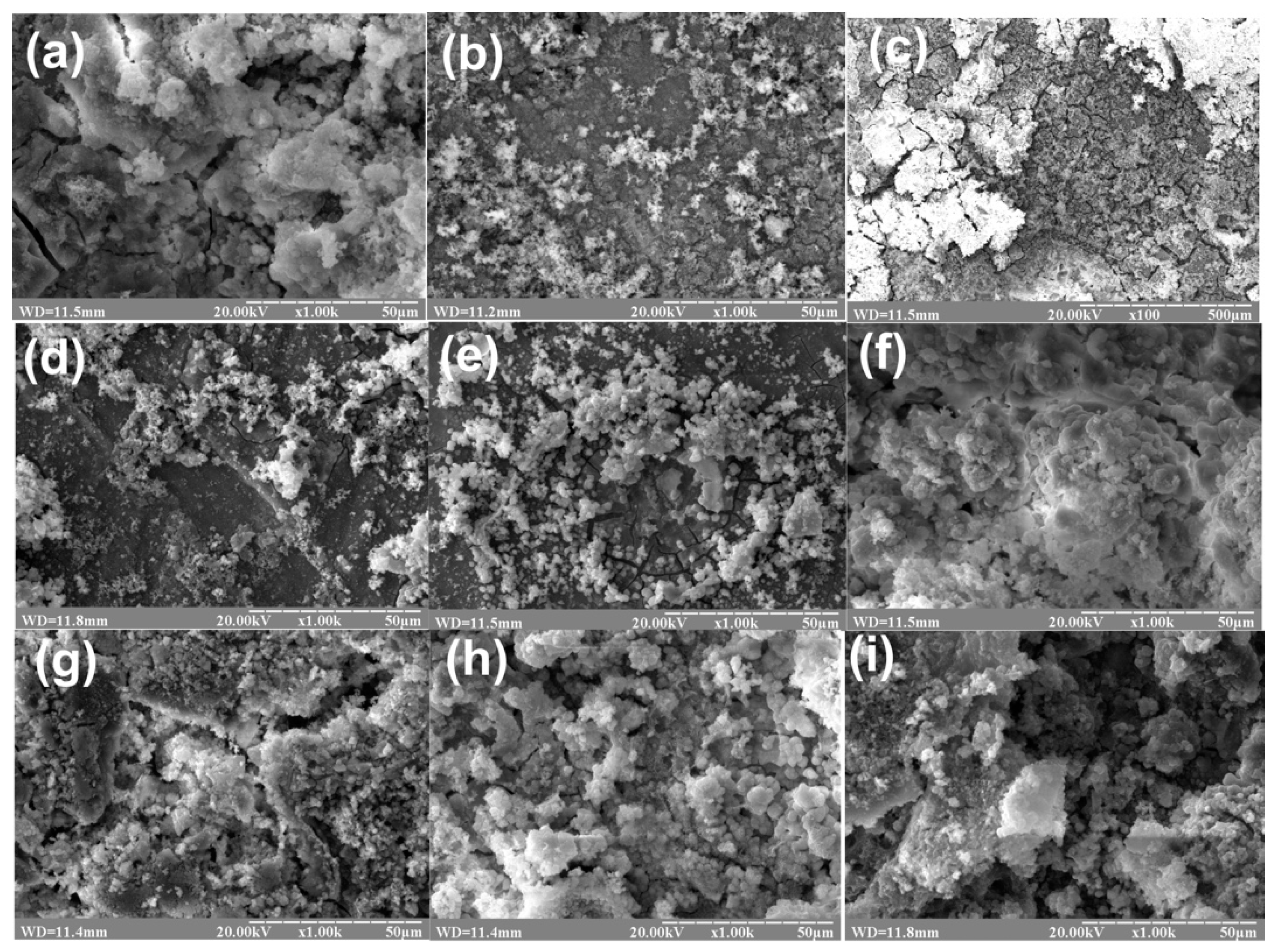 Coatings   Free Full-Text   Degradation and In Vivo Response of