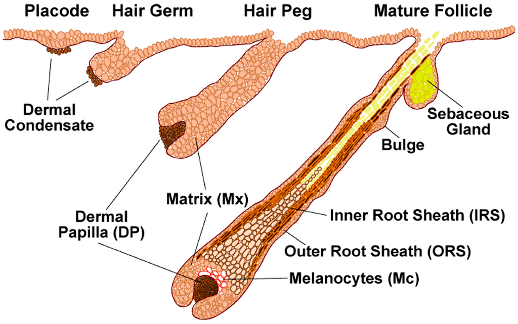 Cosmetics | Free Full-Text | Human Hair and the Impact of Cosmetic ...