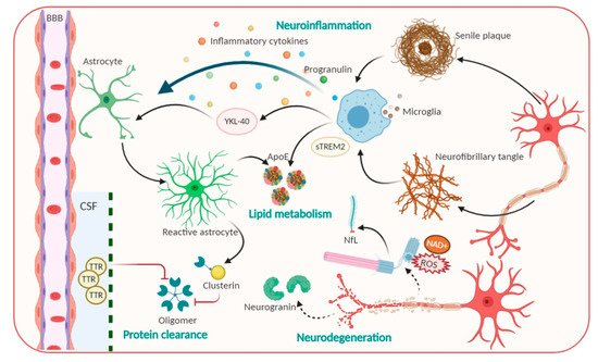 Pathophysiological processes including Amyloid beta, Tau and candidate non-Aβ-Tau biomarkers for Alzheimer's disease.