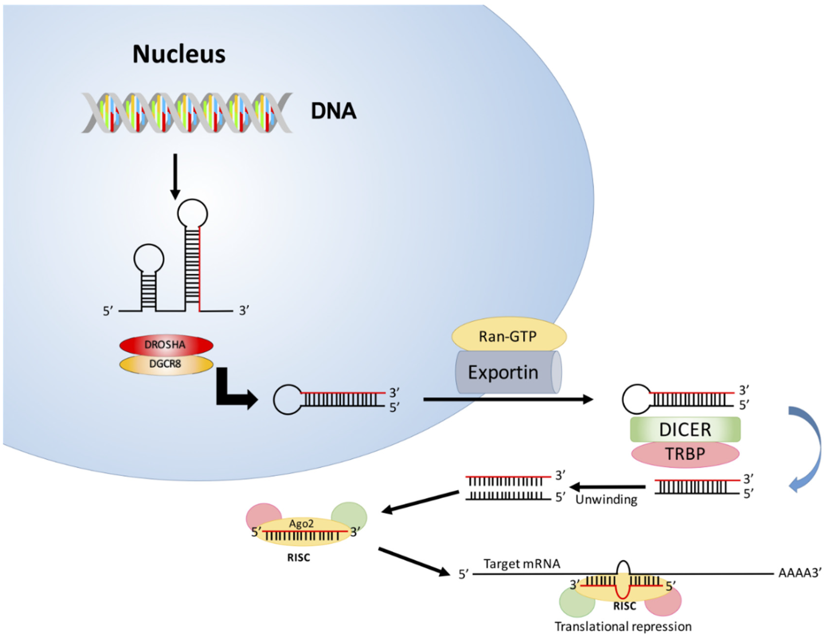Microrna 21 concentrations in breast cancer